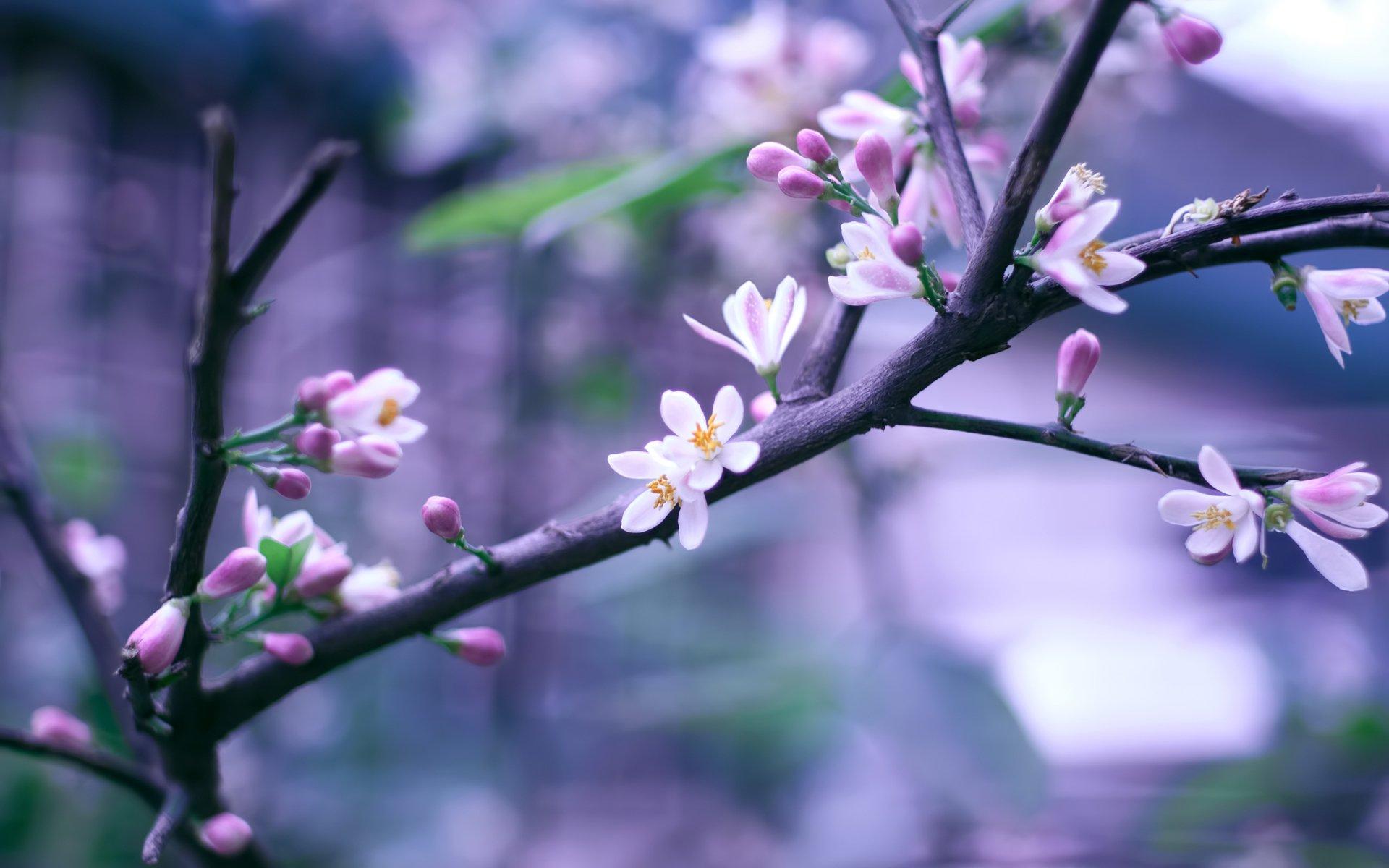 Цветы ветка скачать