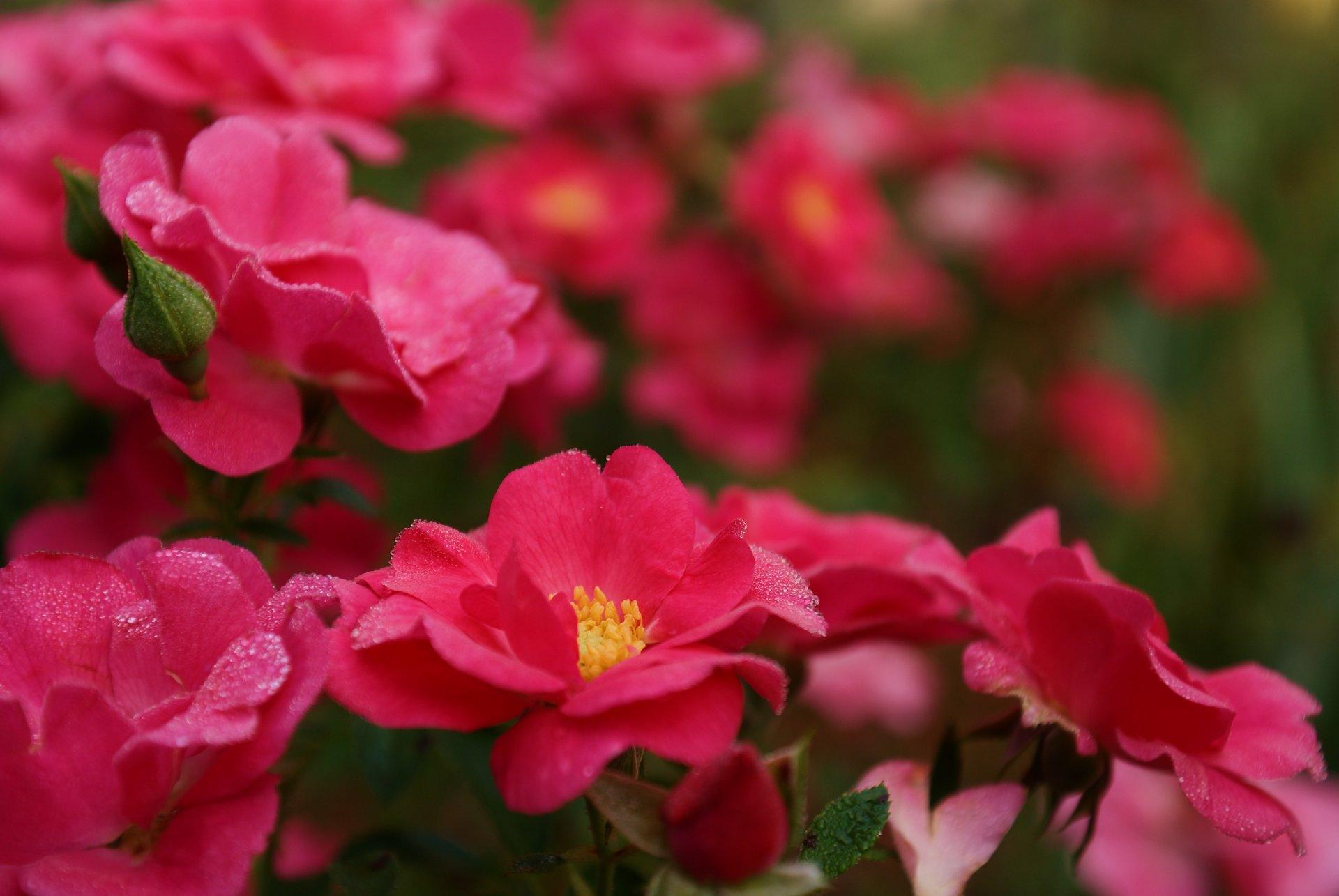 Днем рождения, фотографии красивые цветы