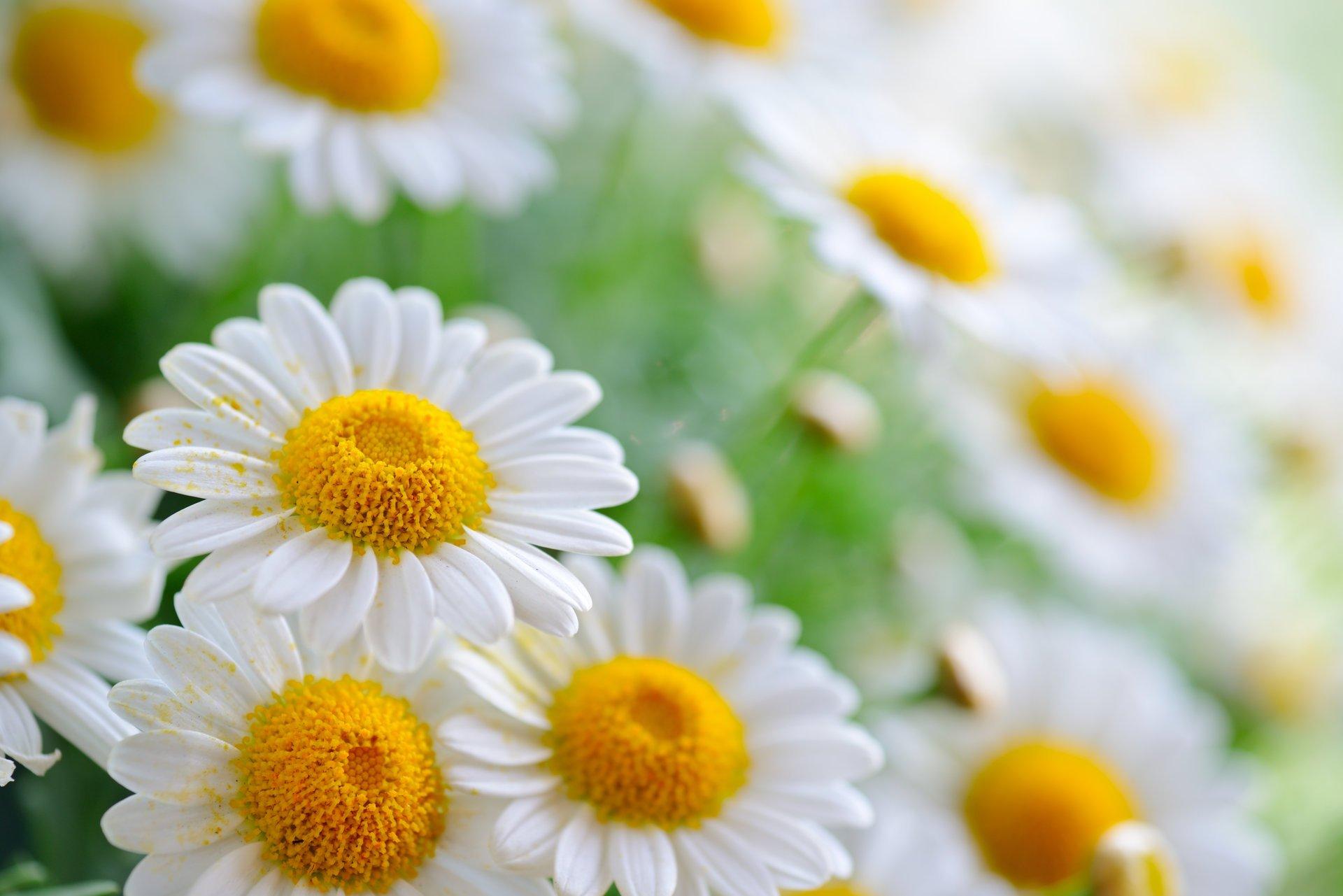 Картинка заставка на компьютер цветы