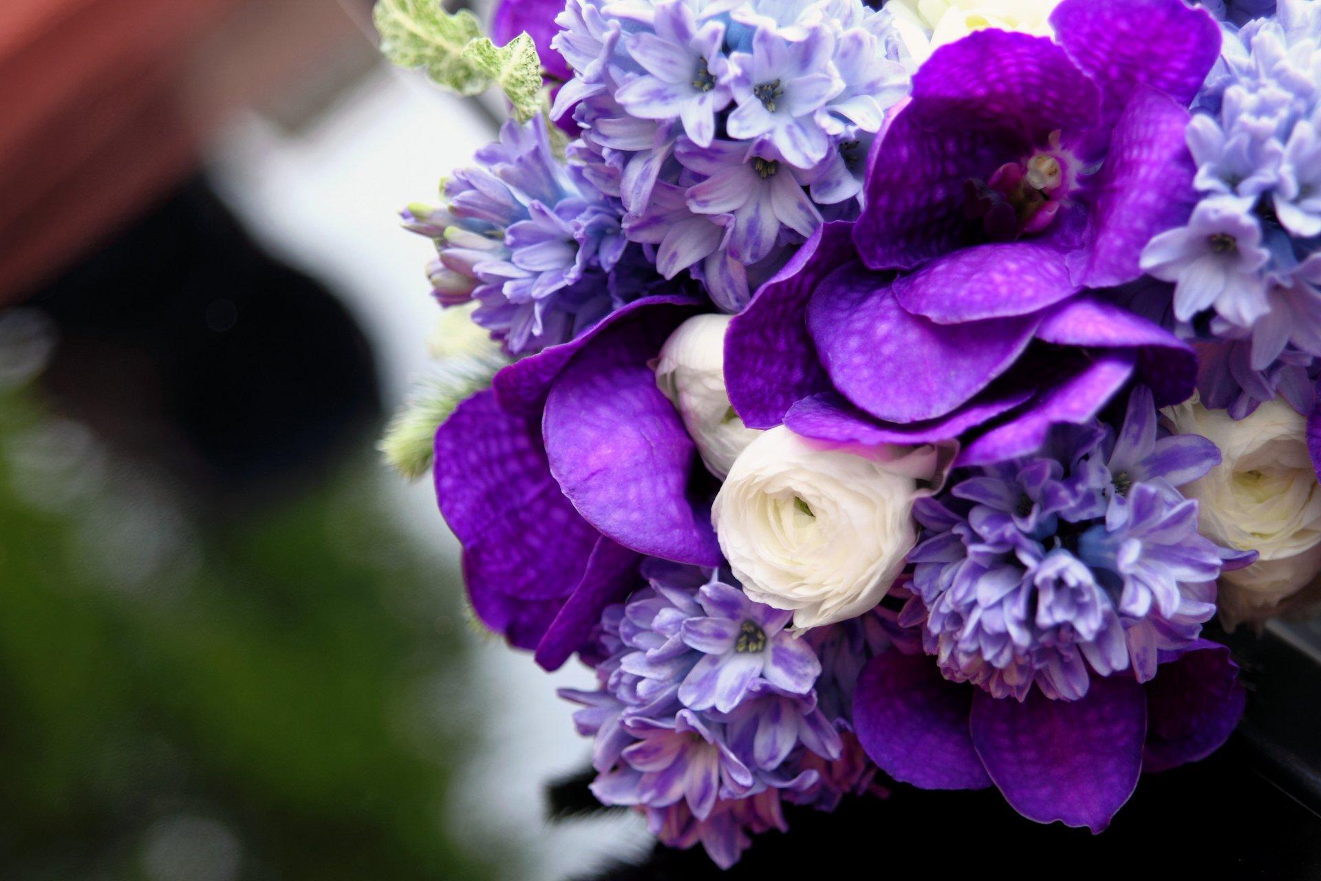 картинки лиловый фиолетовый как правило, находя