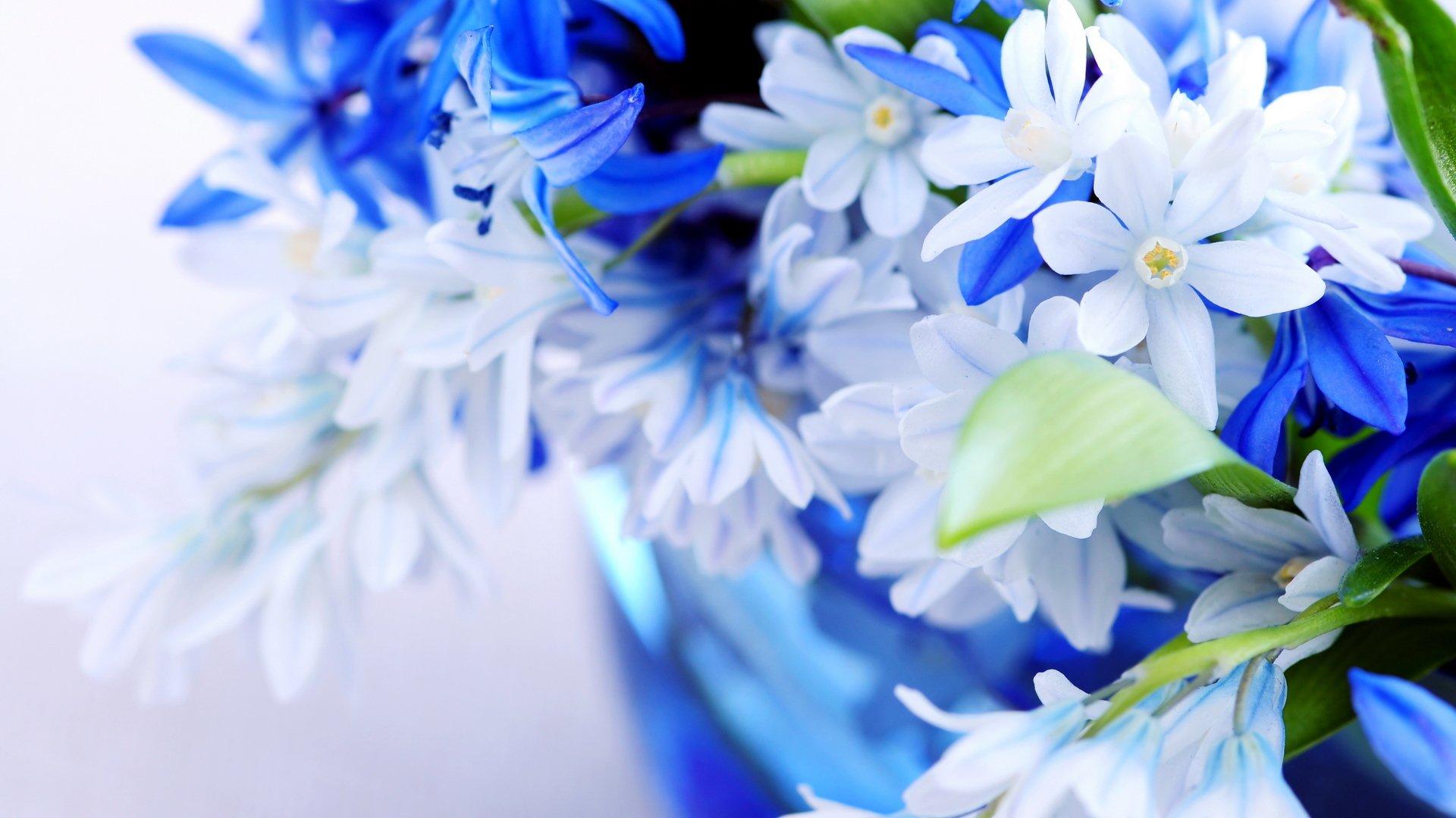 обои на телефон про цветы поиск, онлайн заказ