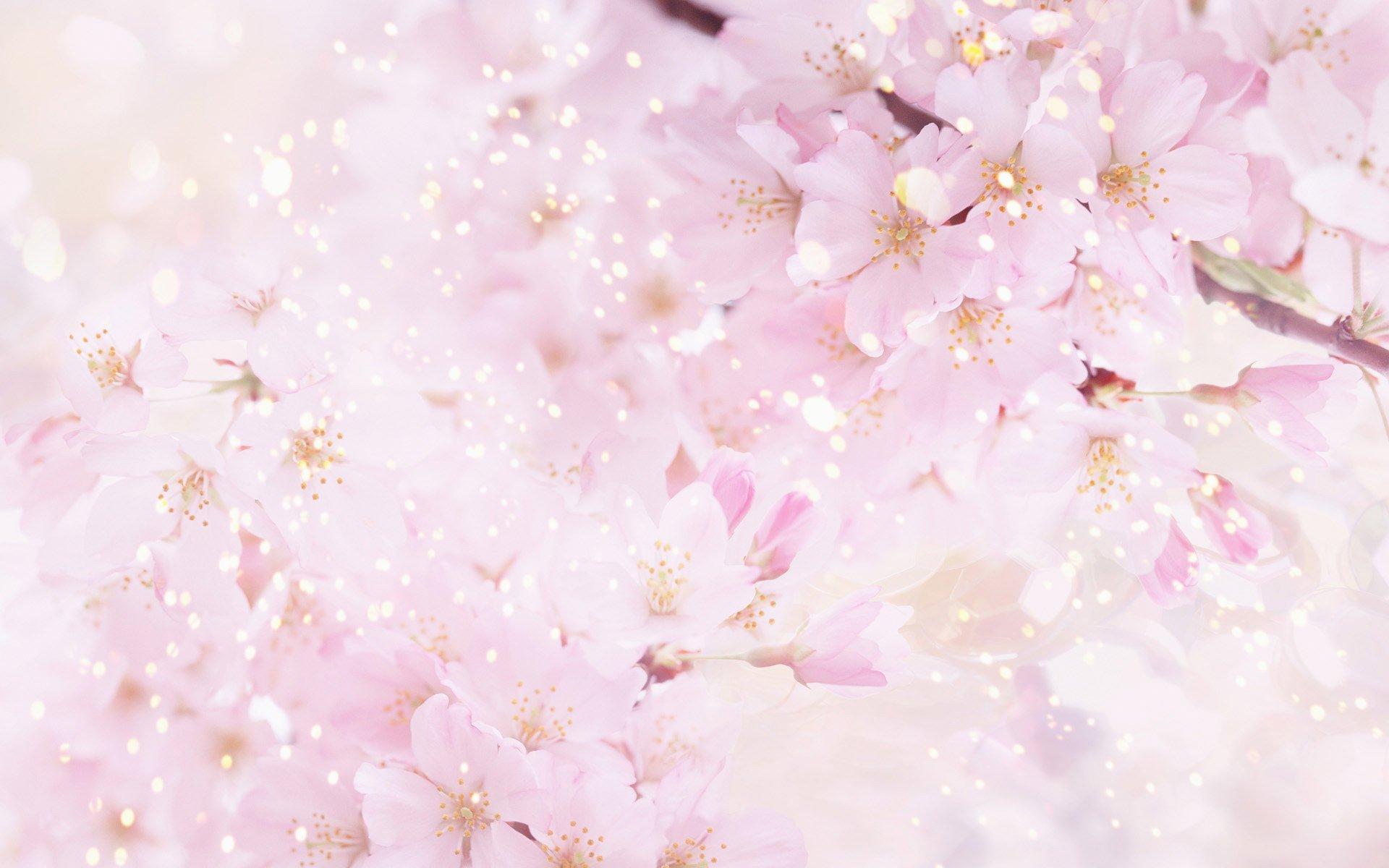 Открытка с цветами сакуры, маши