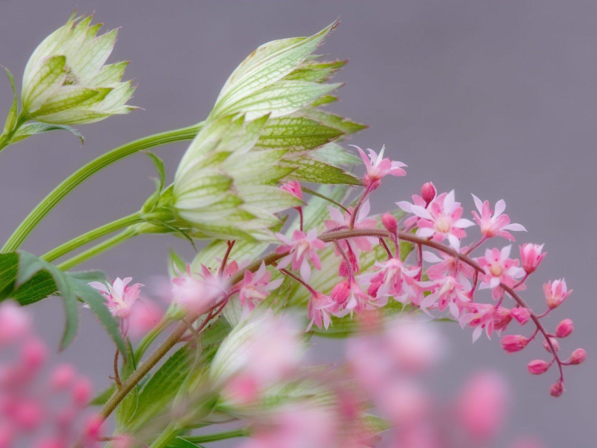 нежные цветочки на ветке  № 1333914  скачать