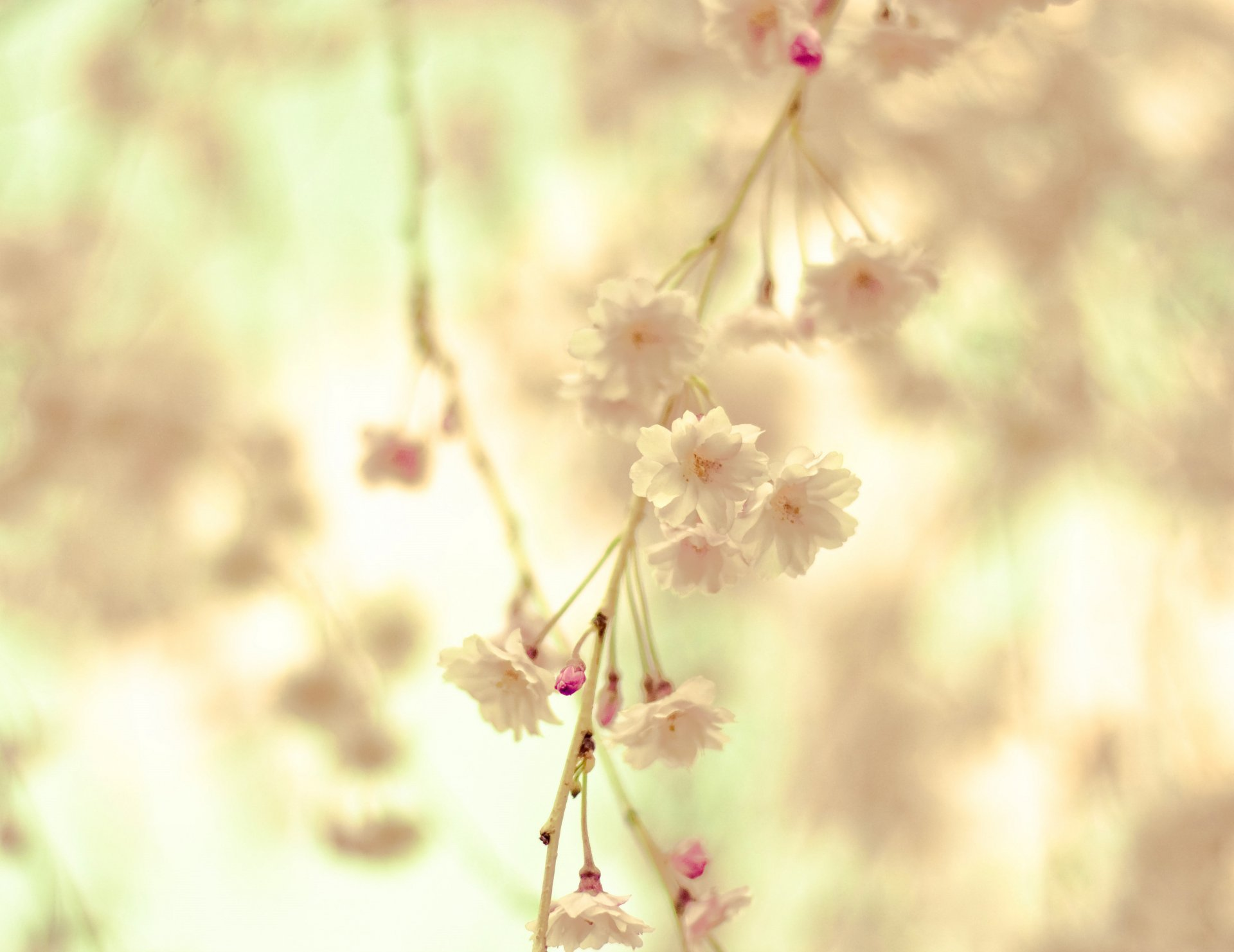 Картинки весна для сайта