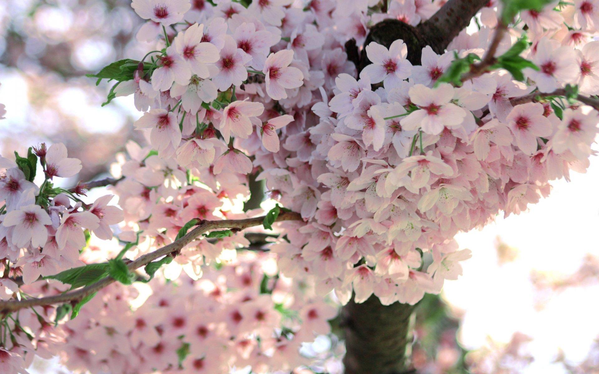Шаблон свадебного дерева пожеланий каждый выбирает
