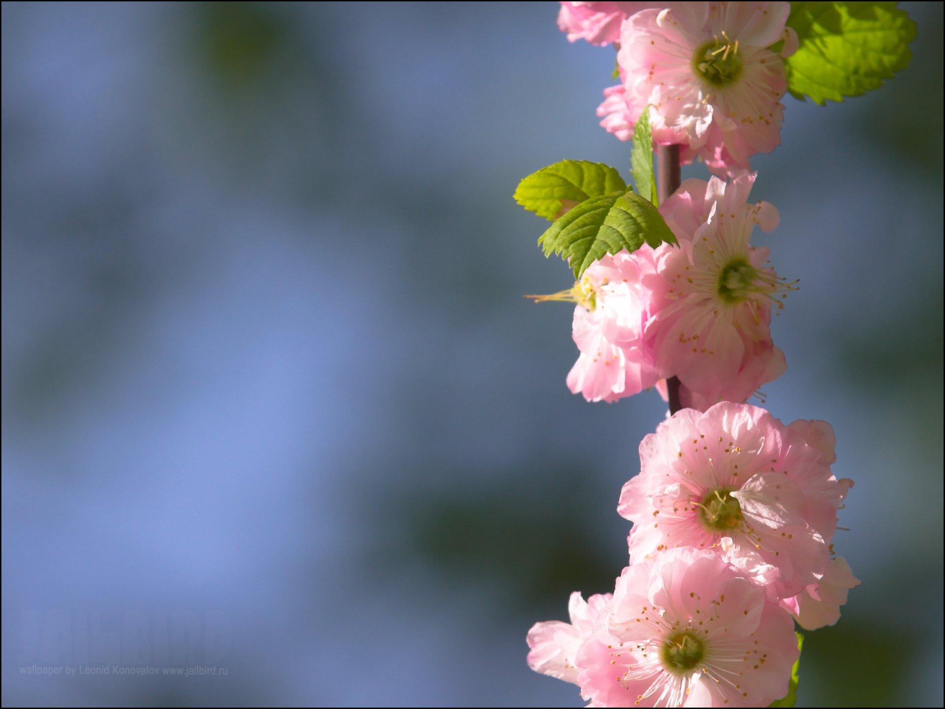 Обои цветы. Разное foto 10