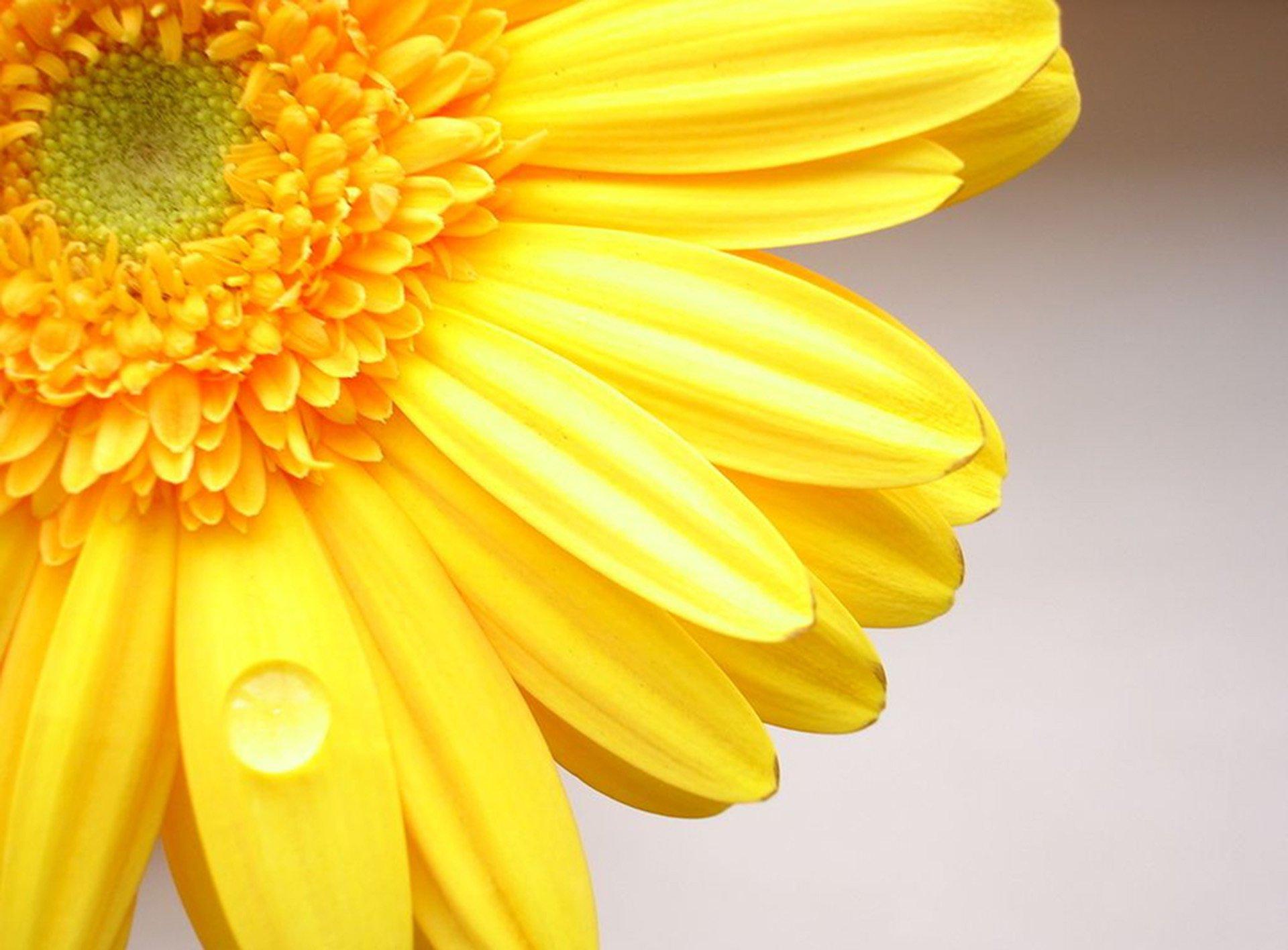 цветок желтый flower yellow  № 1246517  скачать