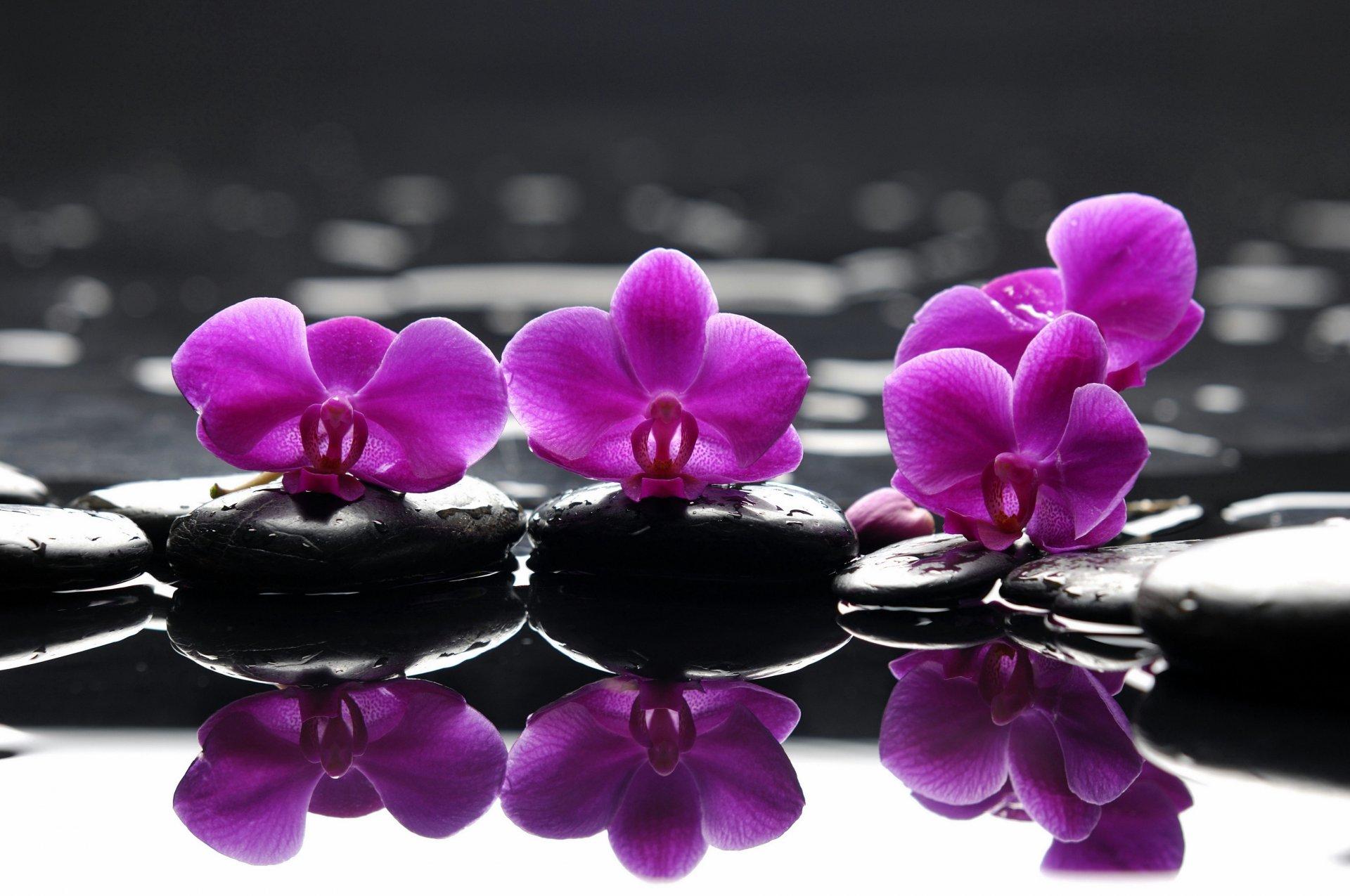 падения картинки высокого разрешения фиолетовые десантники