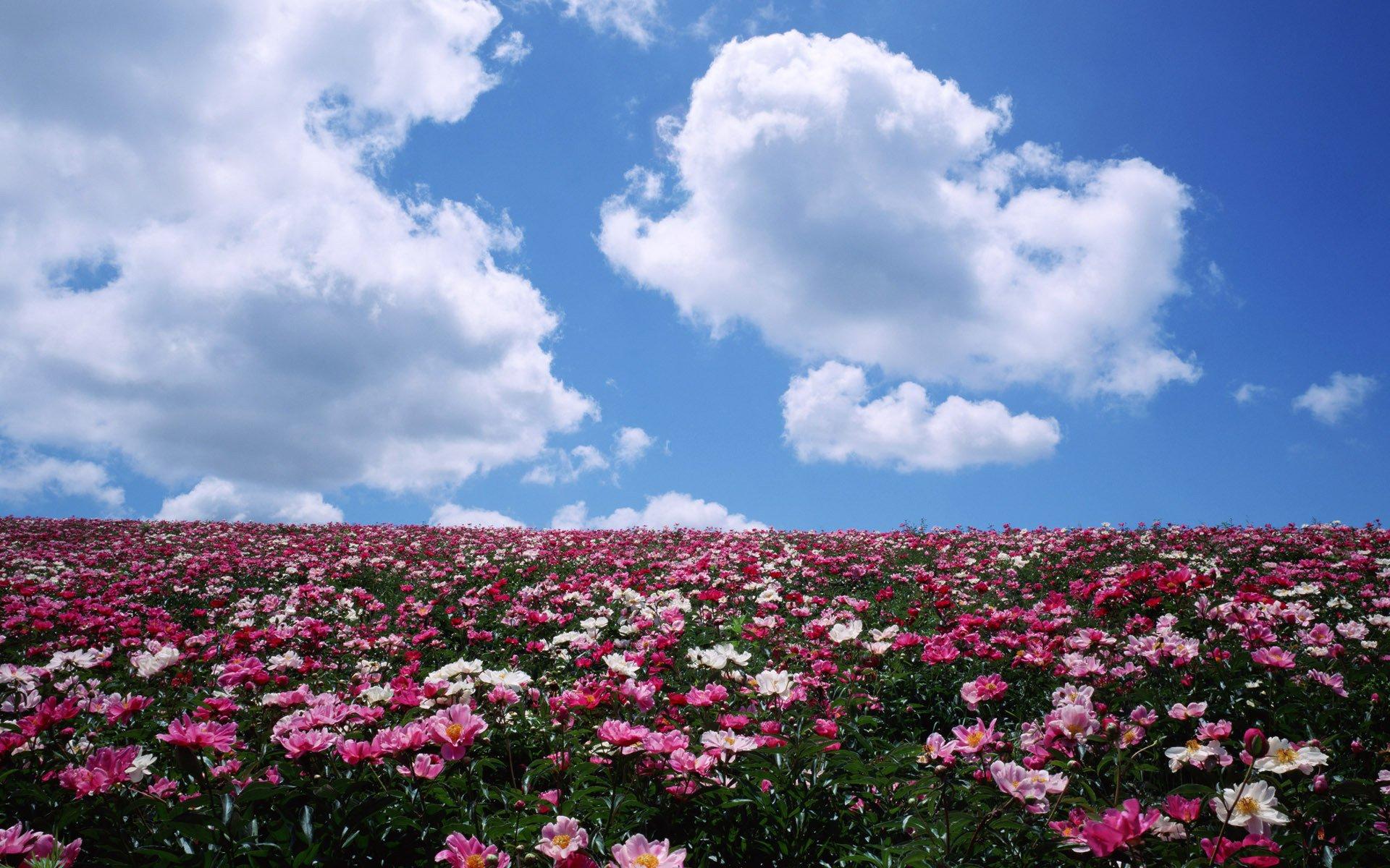 Поле с цветами картинки