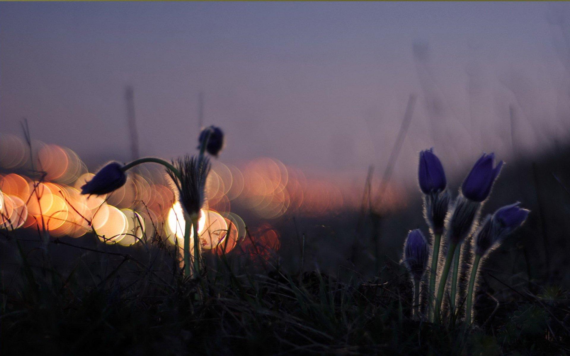 Весенние картинки спокойной ночи, лет совместной