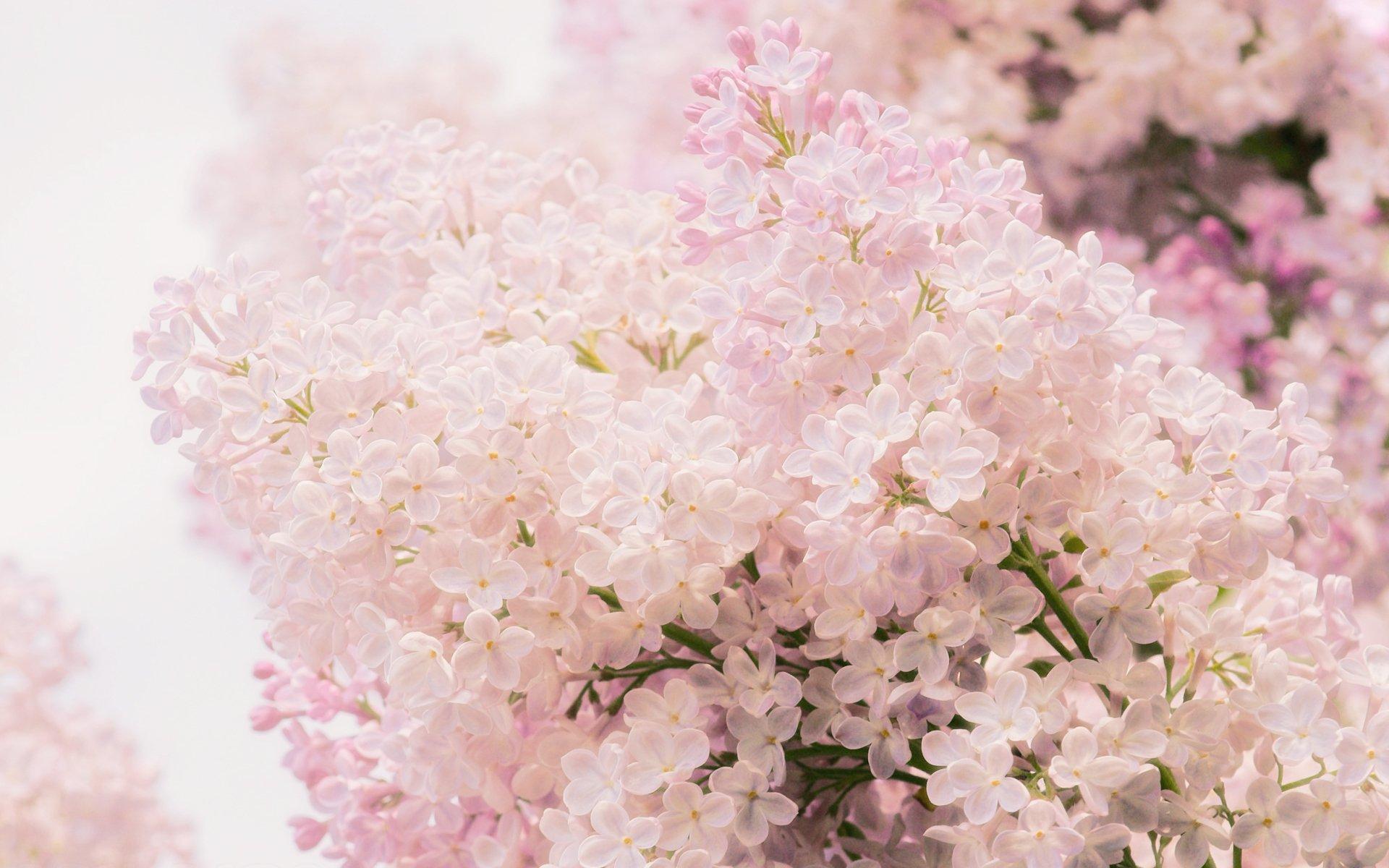 Цветы нежные картинки красивые, днем железнодорожника