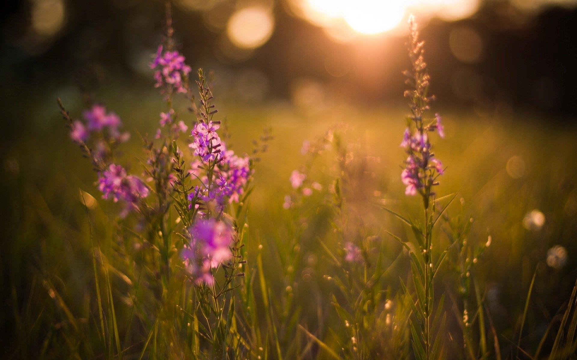 цветы солнце блики  № 1247236 бесплатно