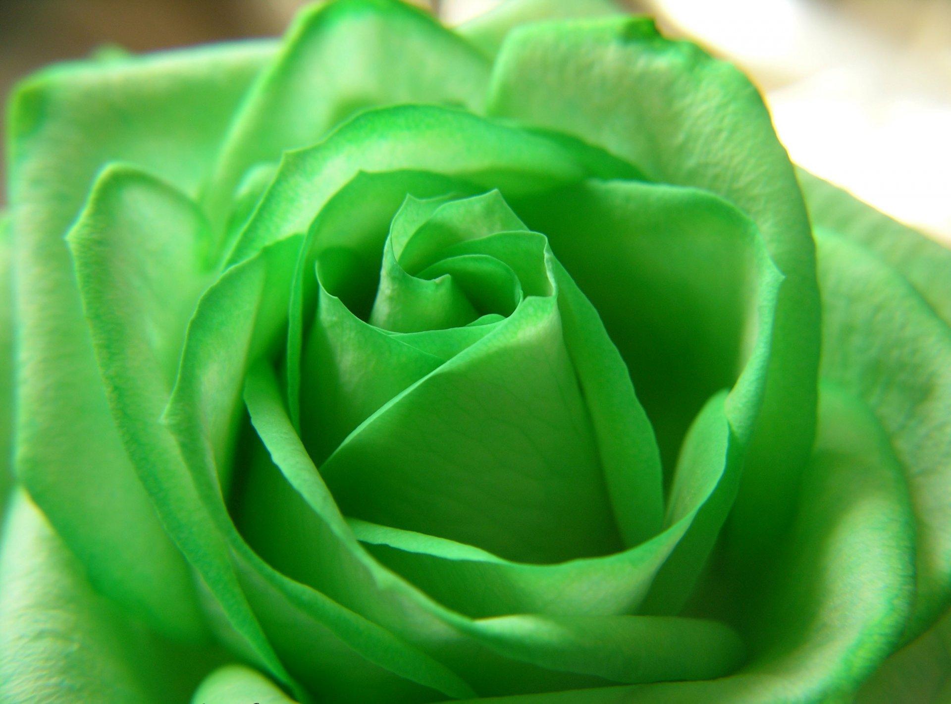 День зеленого цвета картинки, какая прикольные картинки