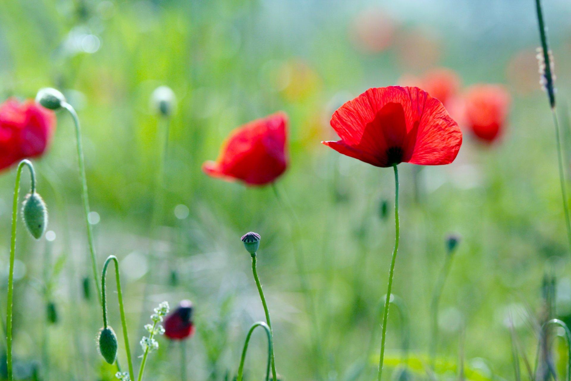 Обои на рабочий стол лето вода природа цветы