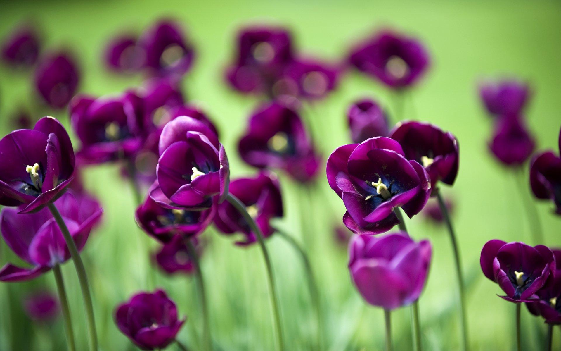Обои цветы 1366x768 на рабочий стол скачать цветы обои 1366x768 ...   1200x1920