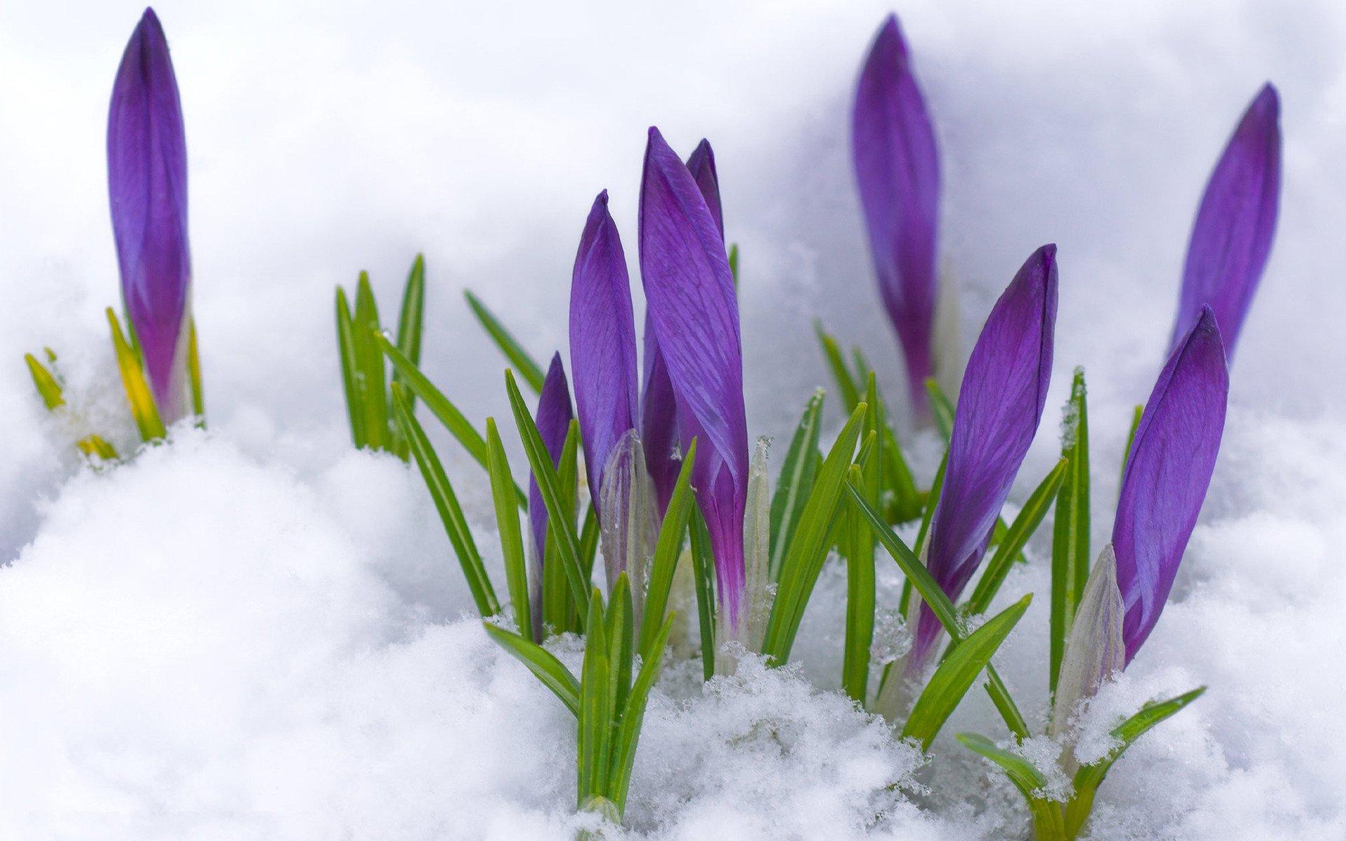 Картинка с весной красивая, картинках для брата