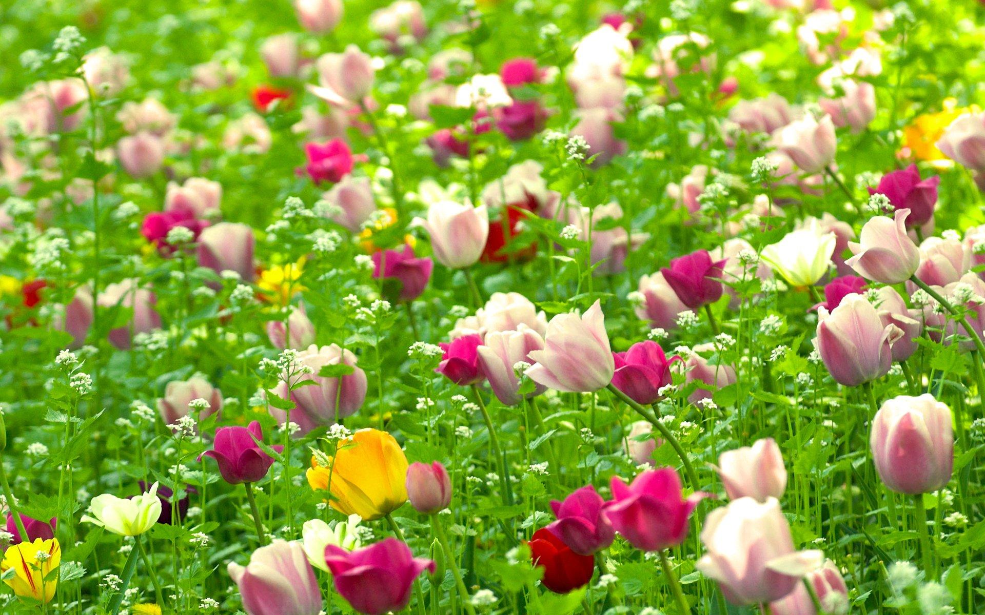 обои на рабочий стол весна лето цветы общем