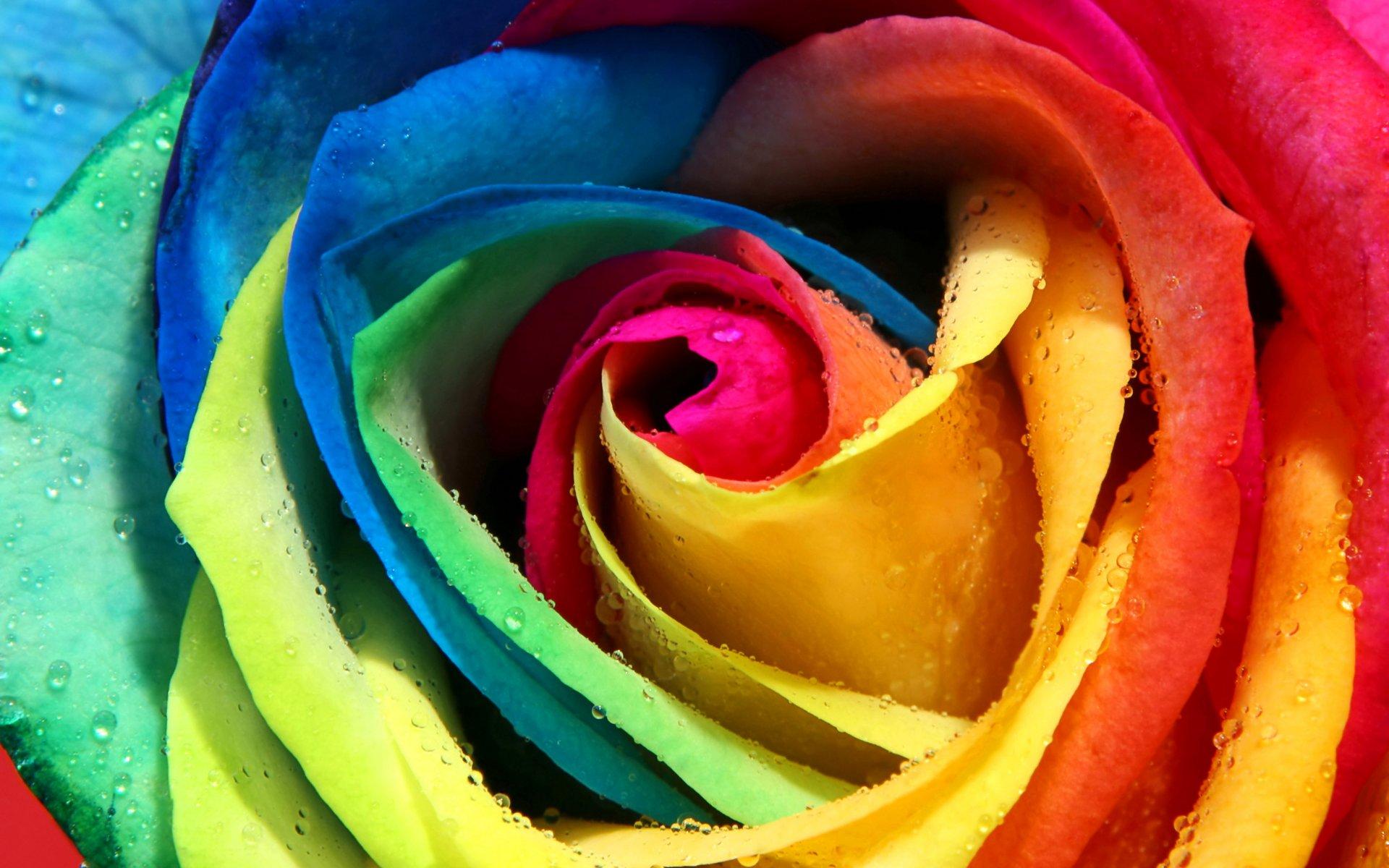 фотообои на нокиа 1030 в виде розы