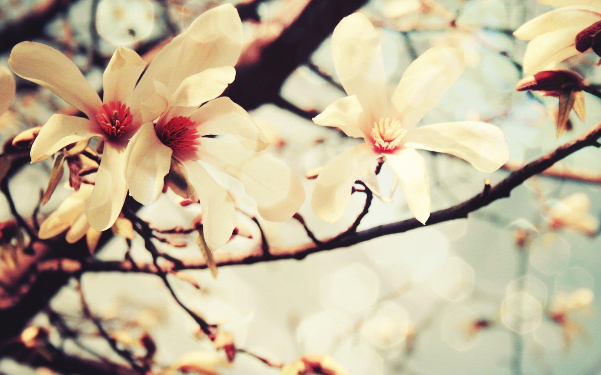 Картинка ванильное дерево