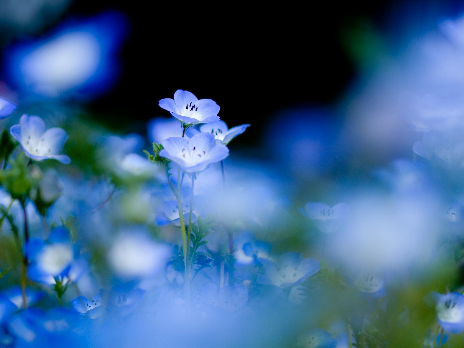 голубые картинки на мой мир вот людей, которые