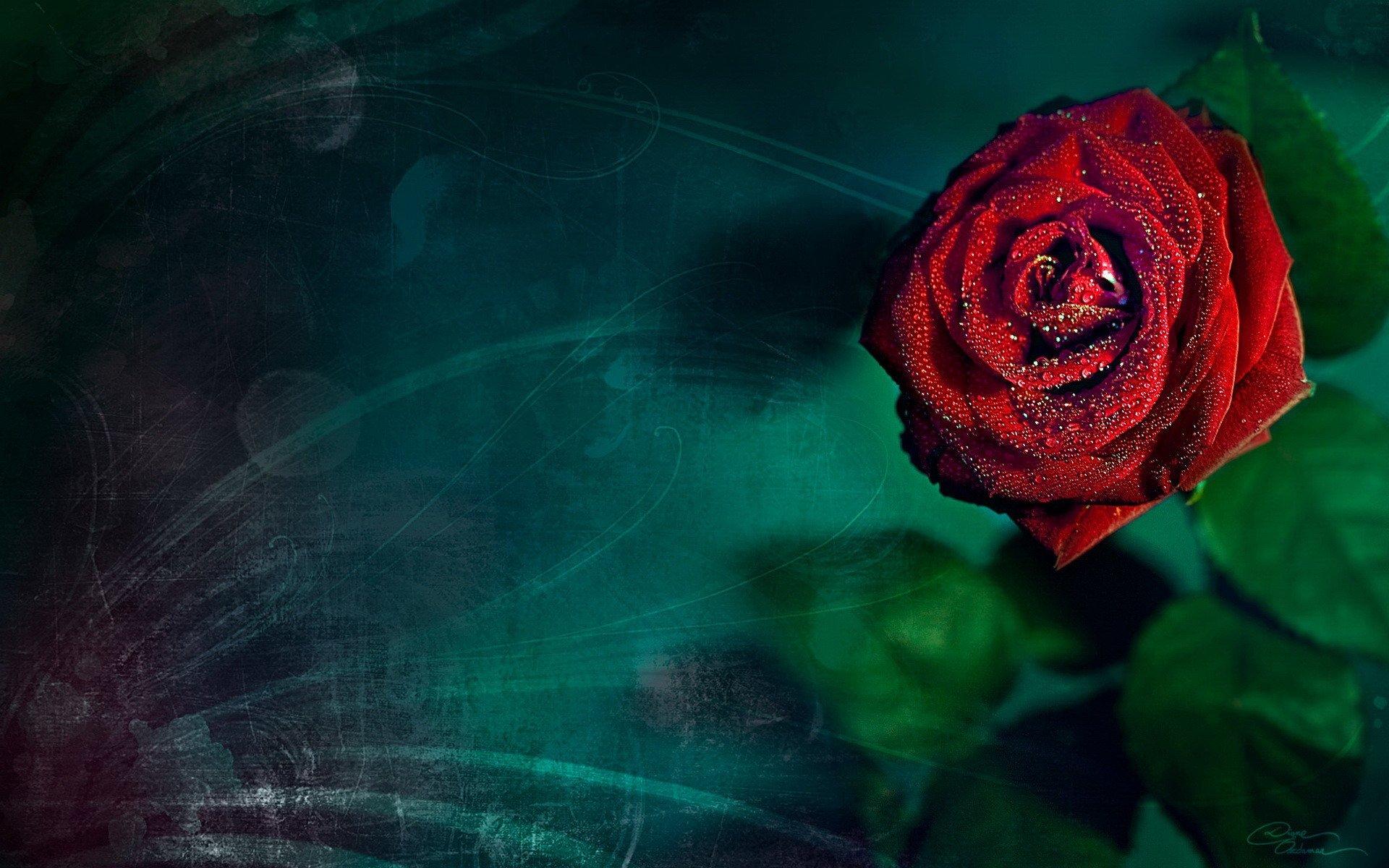 графика космос цветы роза graphics space flowers rose  № 927168 бесплатно