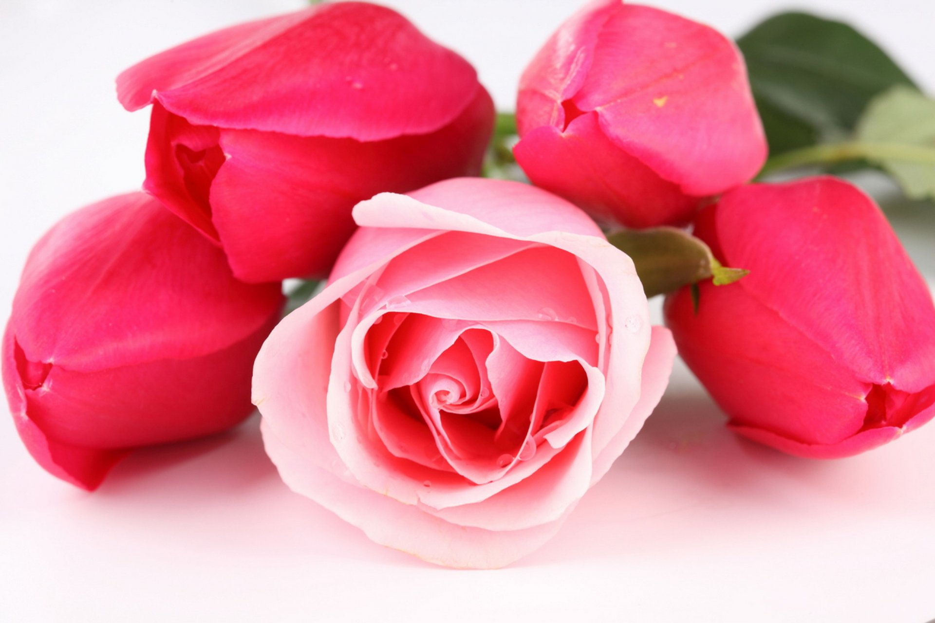 Цветы для любимой девушки картинки самые, майл