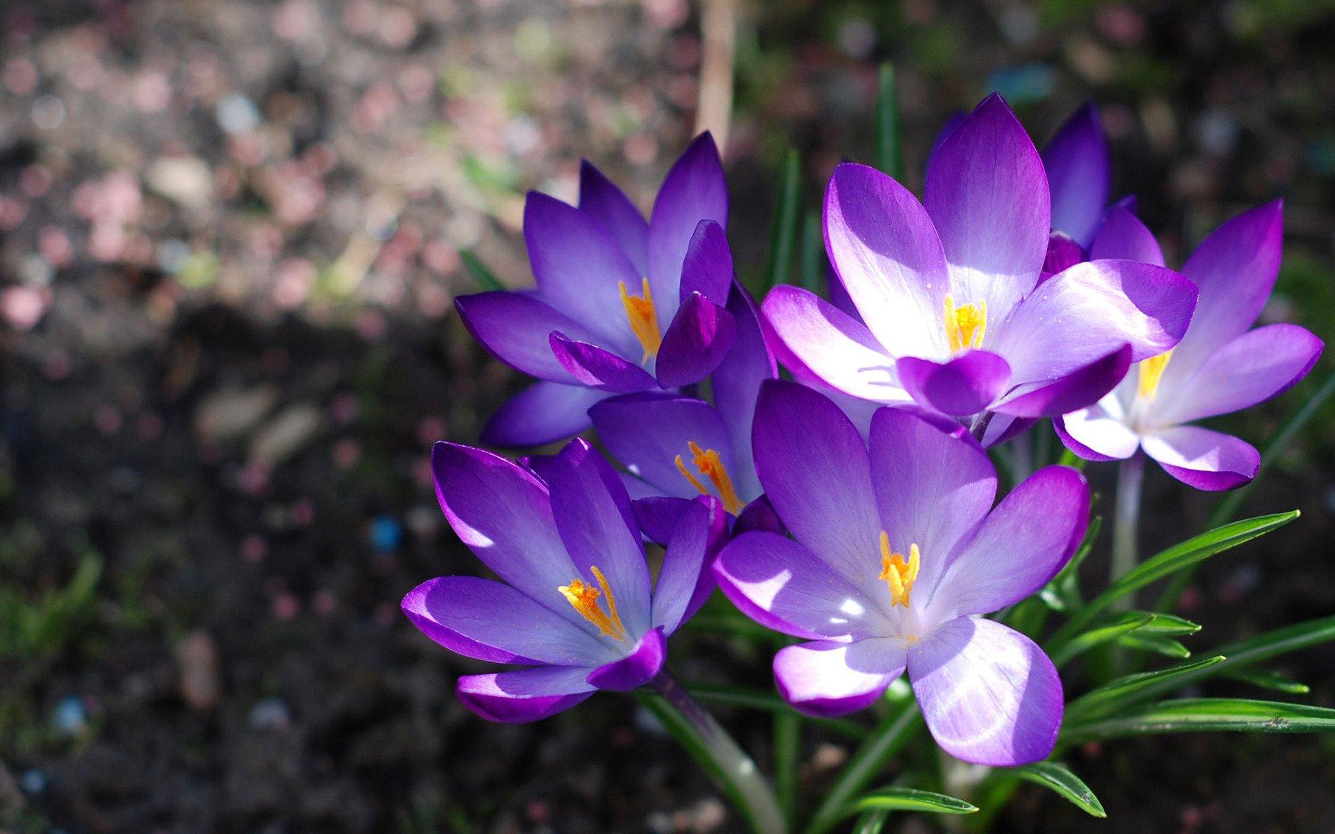 Цветы весна картинки обои, написать открытке деда