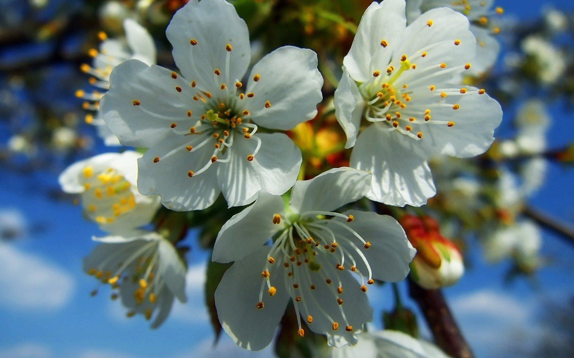 Картинки весна на компьютер образовывается