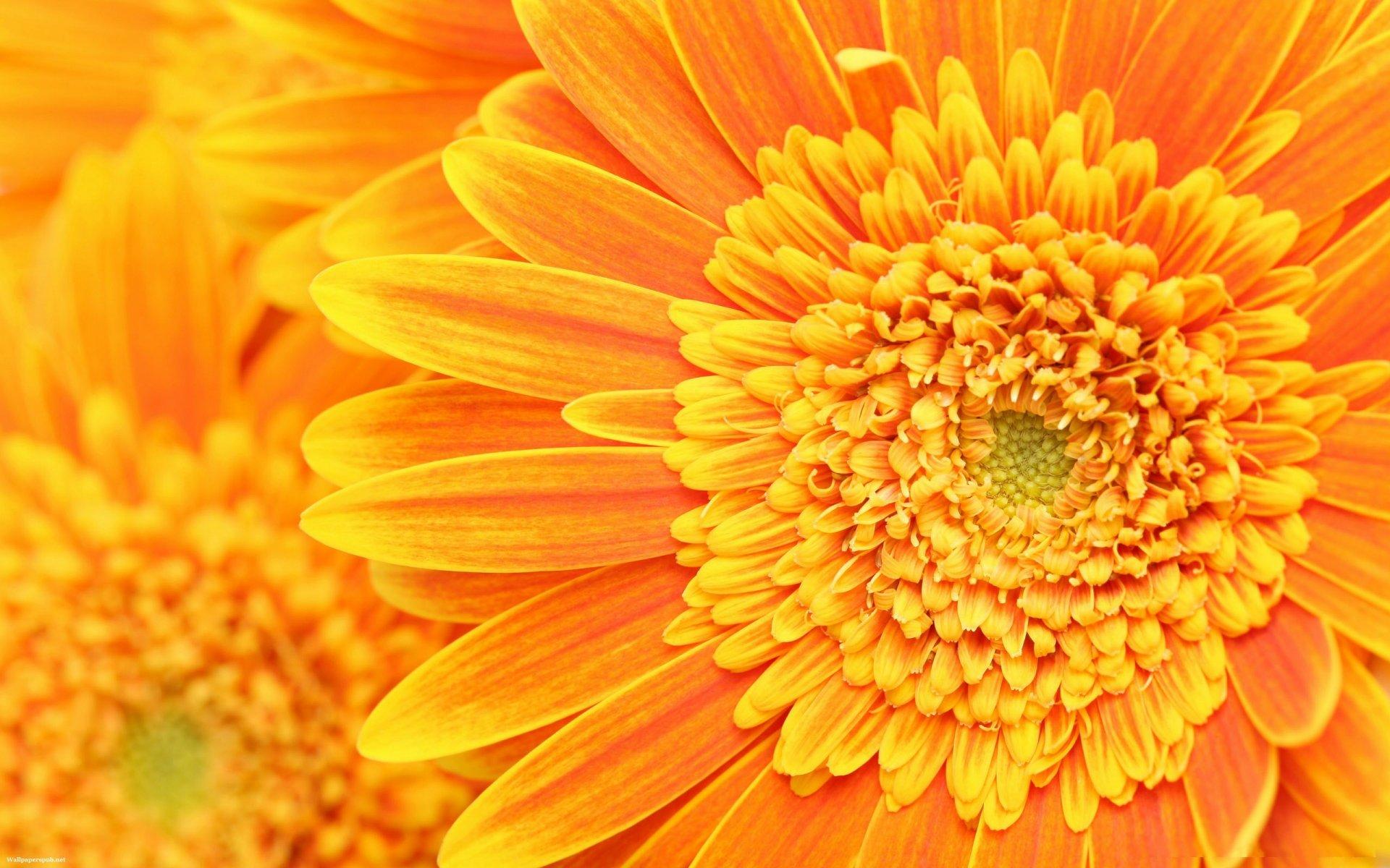 Картинки цветы на оранжевом фоне