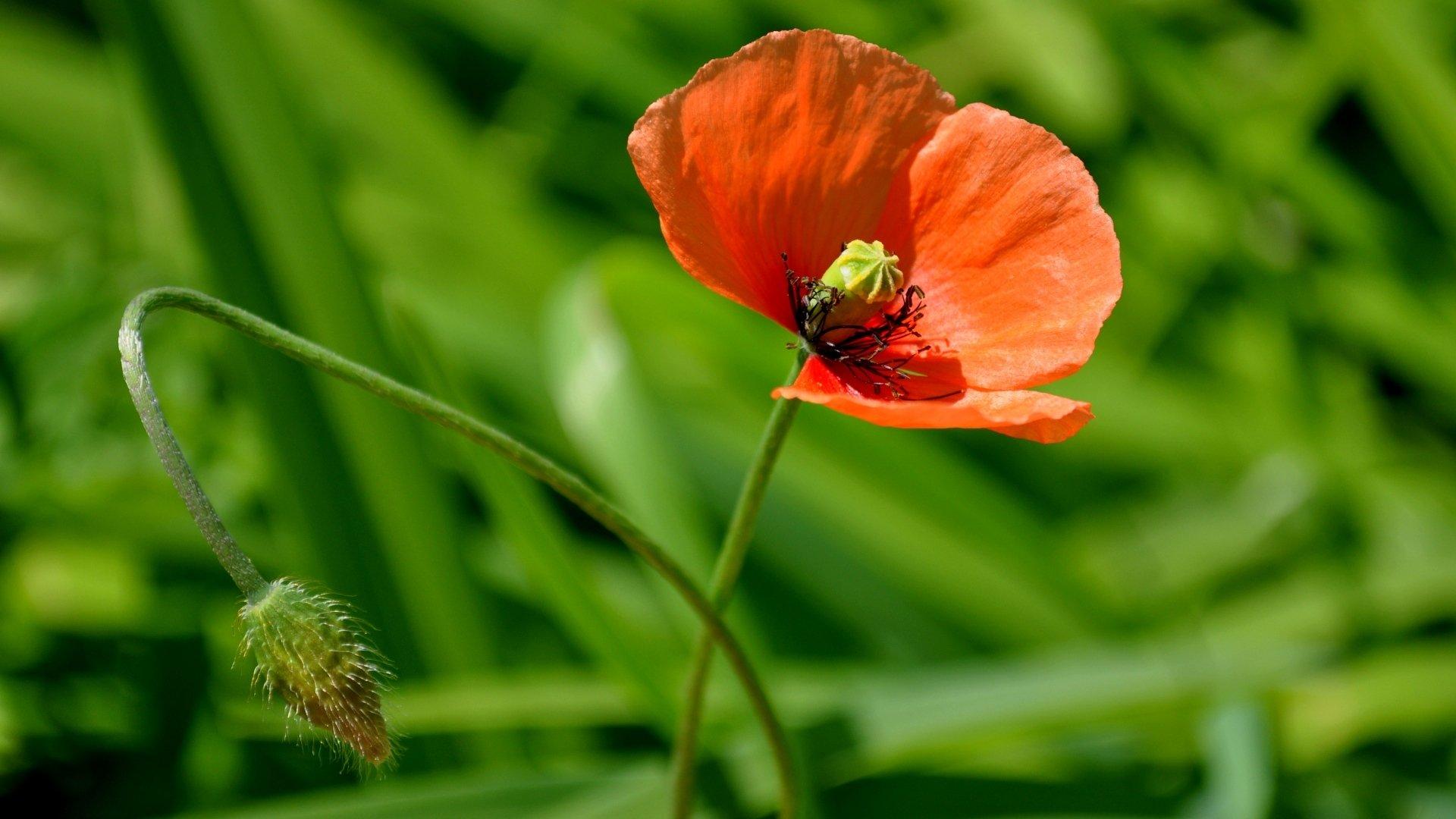 природа цветок крупный план смотреть