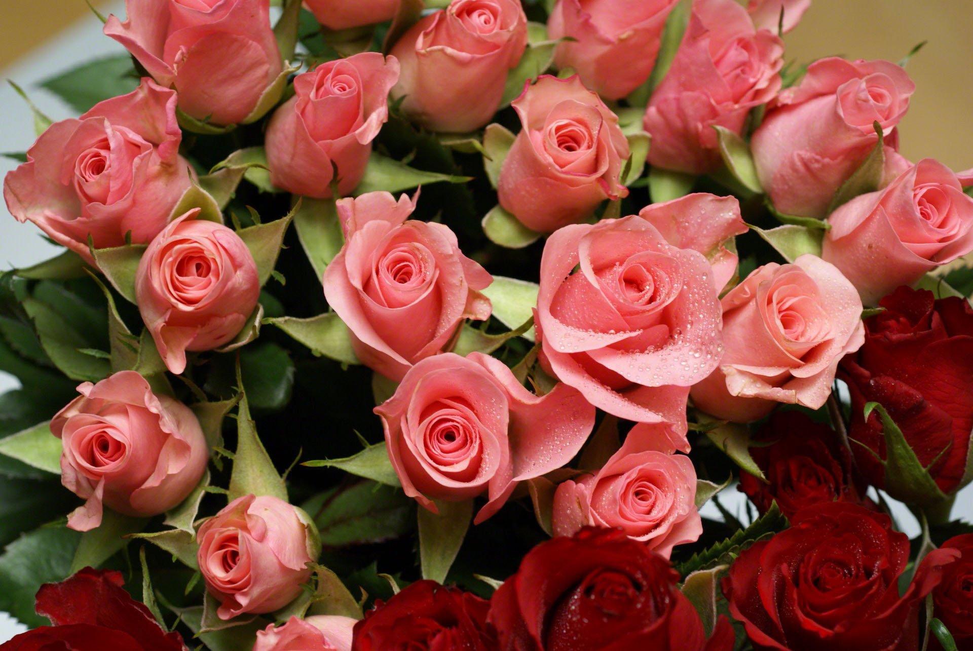 фото роз в хорошем качестве для печати ней