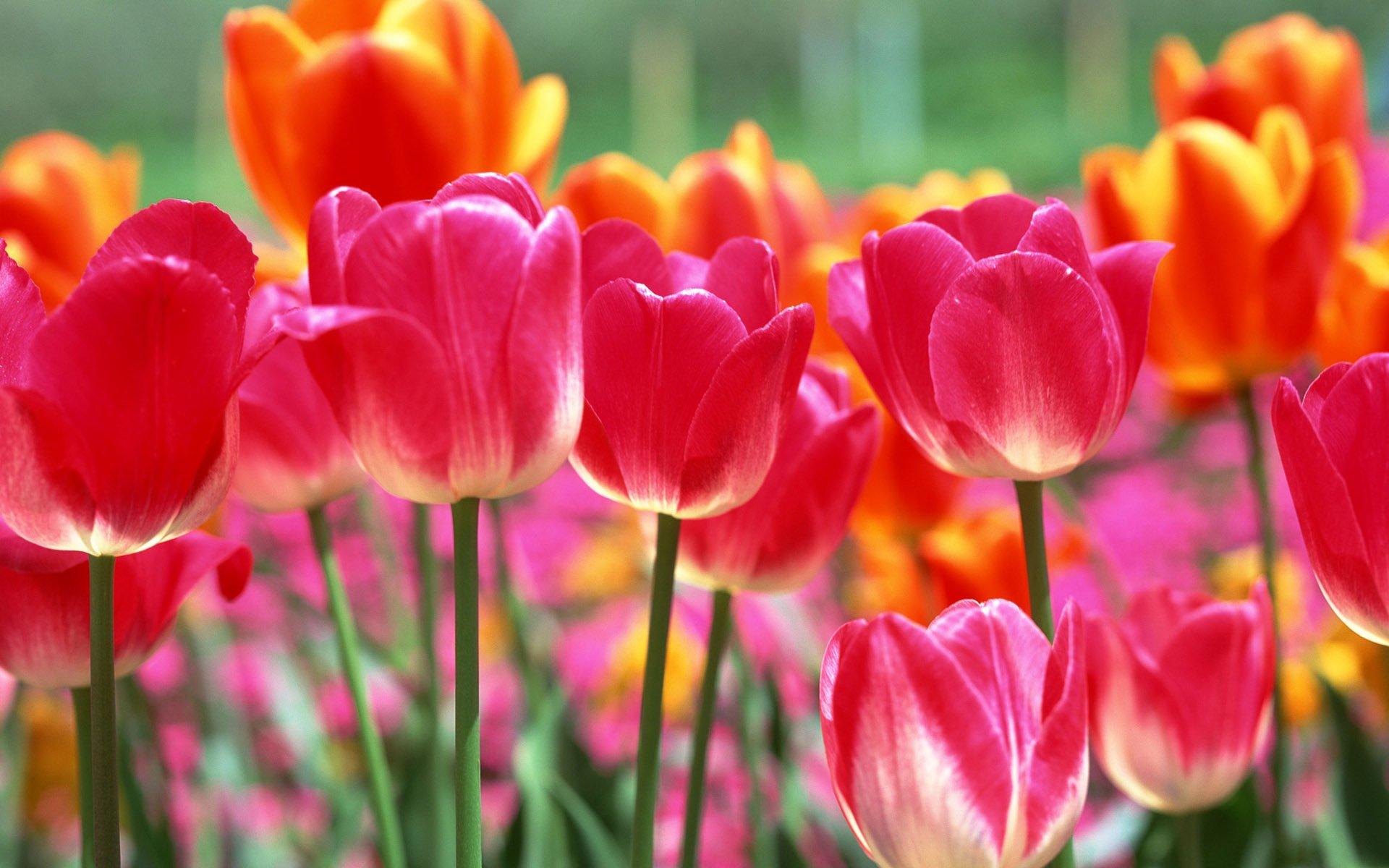 Днем, цветы картинки