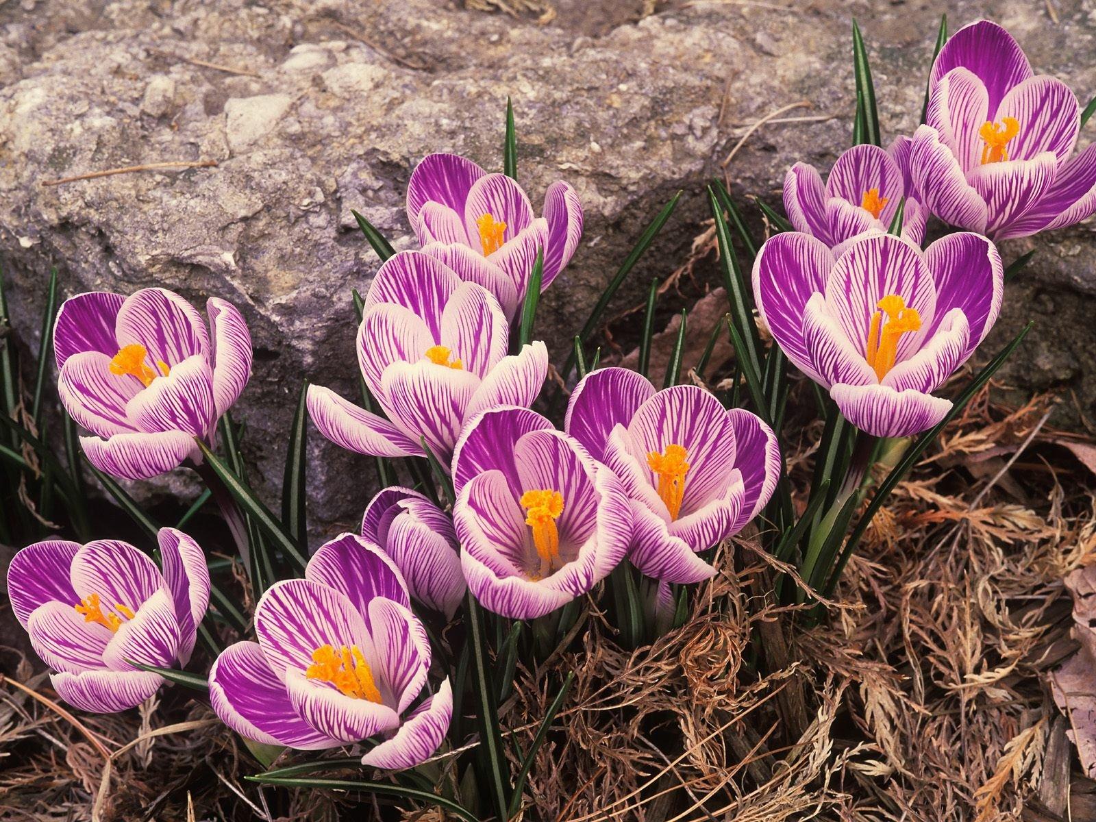 Картинки о весне на рабочий стол красивые