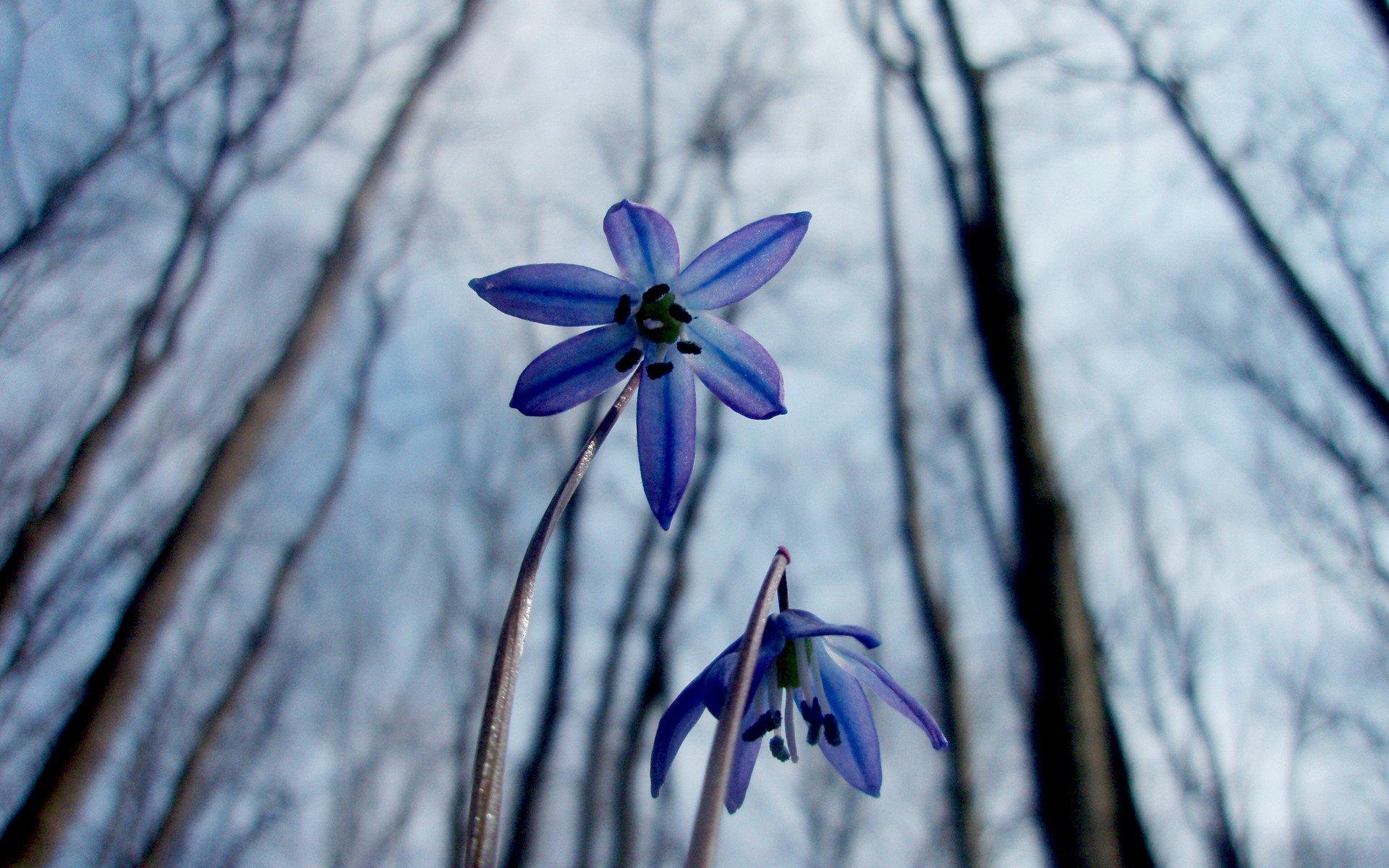 обои на телефон лесные цветы связано оптовыми поставками