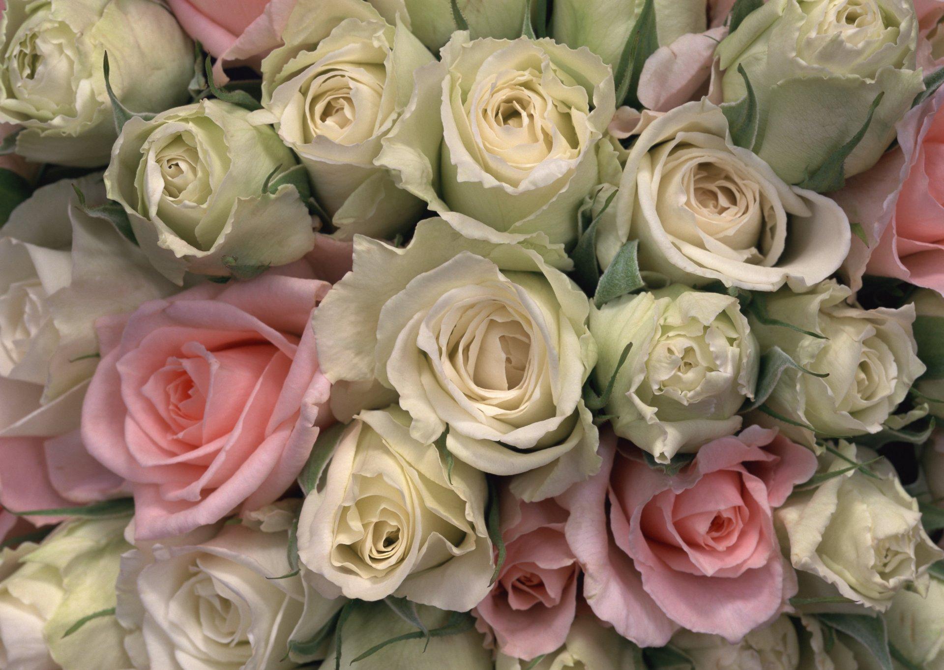 Фото букетов роз в отличном разрешении
