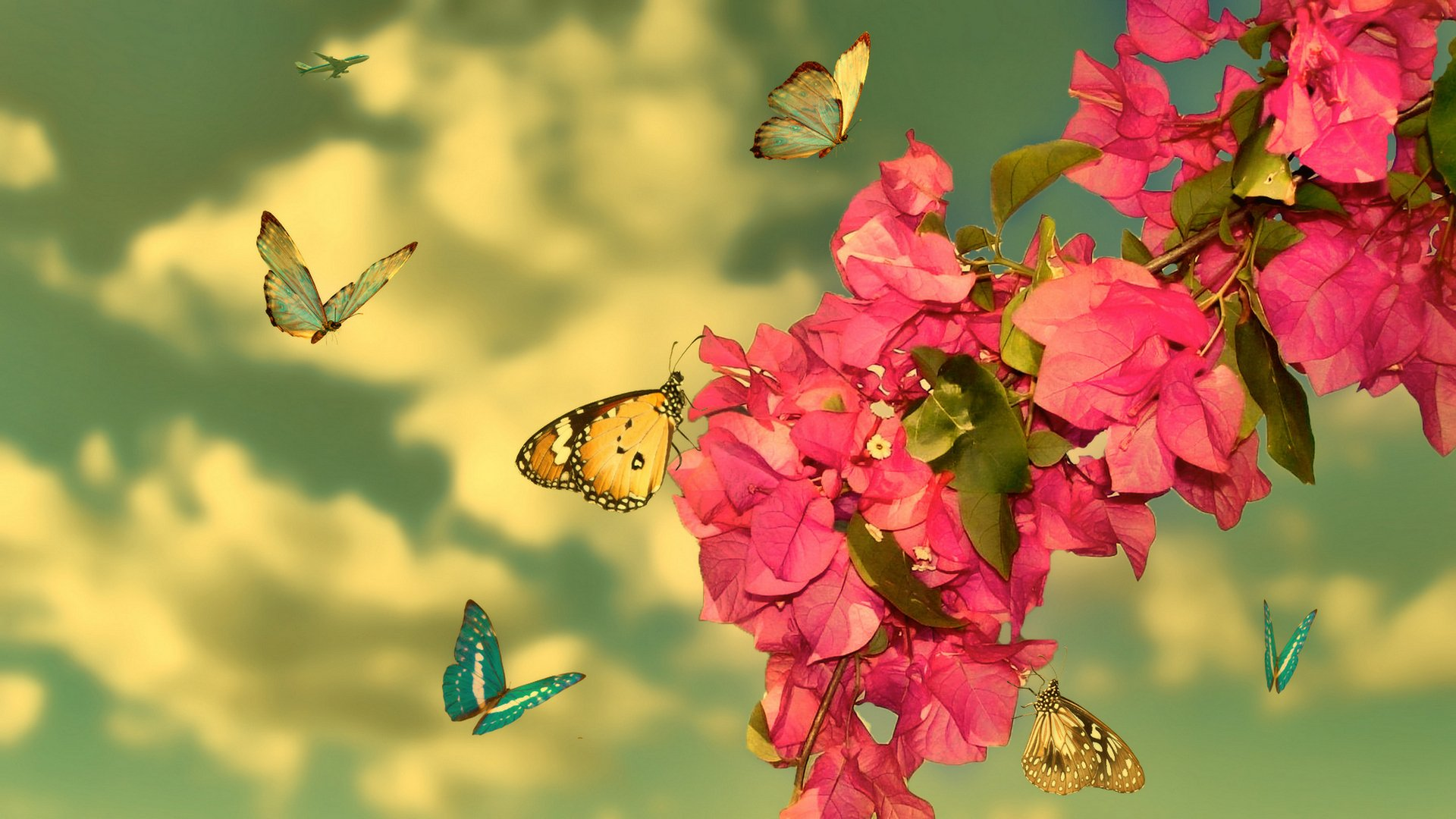 Картинки фото, бабочки летают открытка