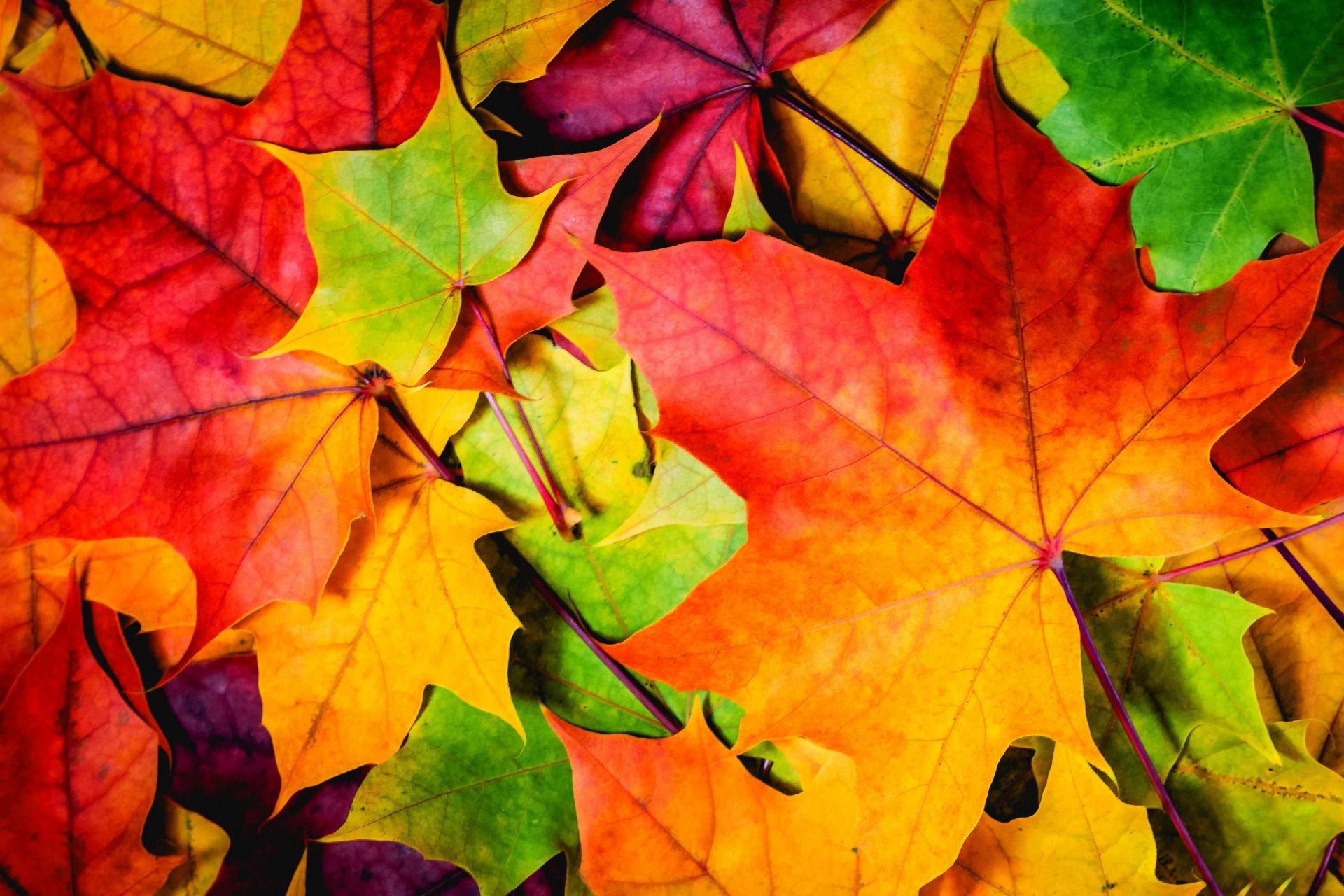 Картинки с осенней листвой