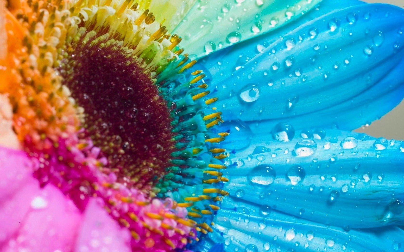 красивые картинки на аву растения плавает ныряет, может