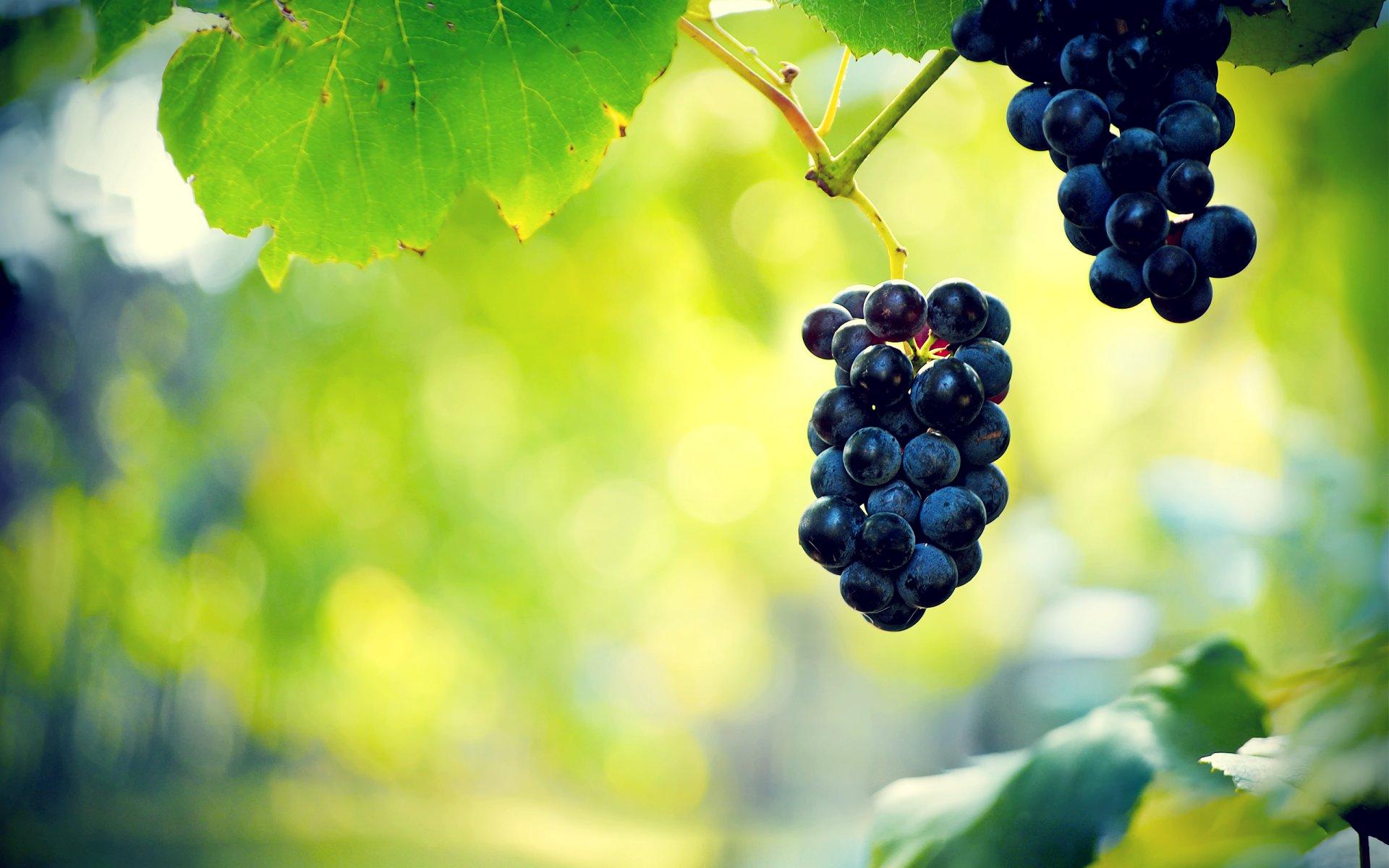 данной статьи фотообои с виноградной лозой разместить свою