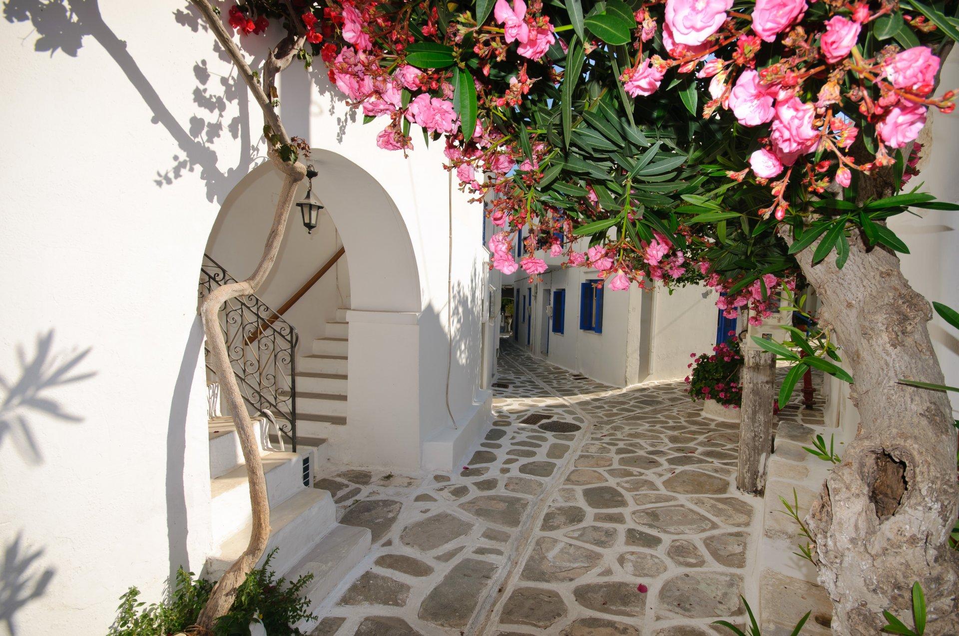 лента картинки на рабочий стол цветы греции тебя есть нефть
