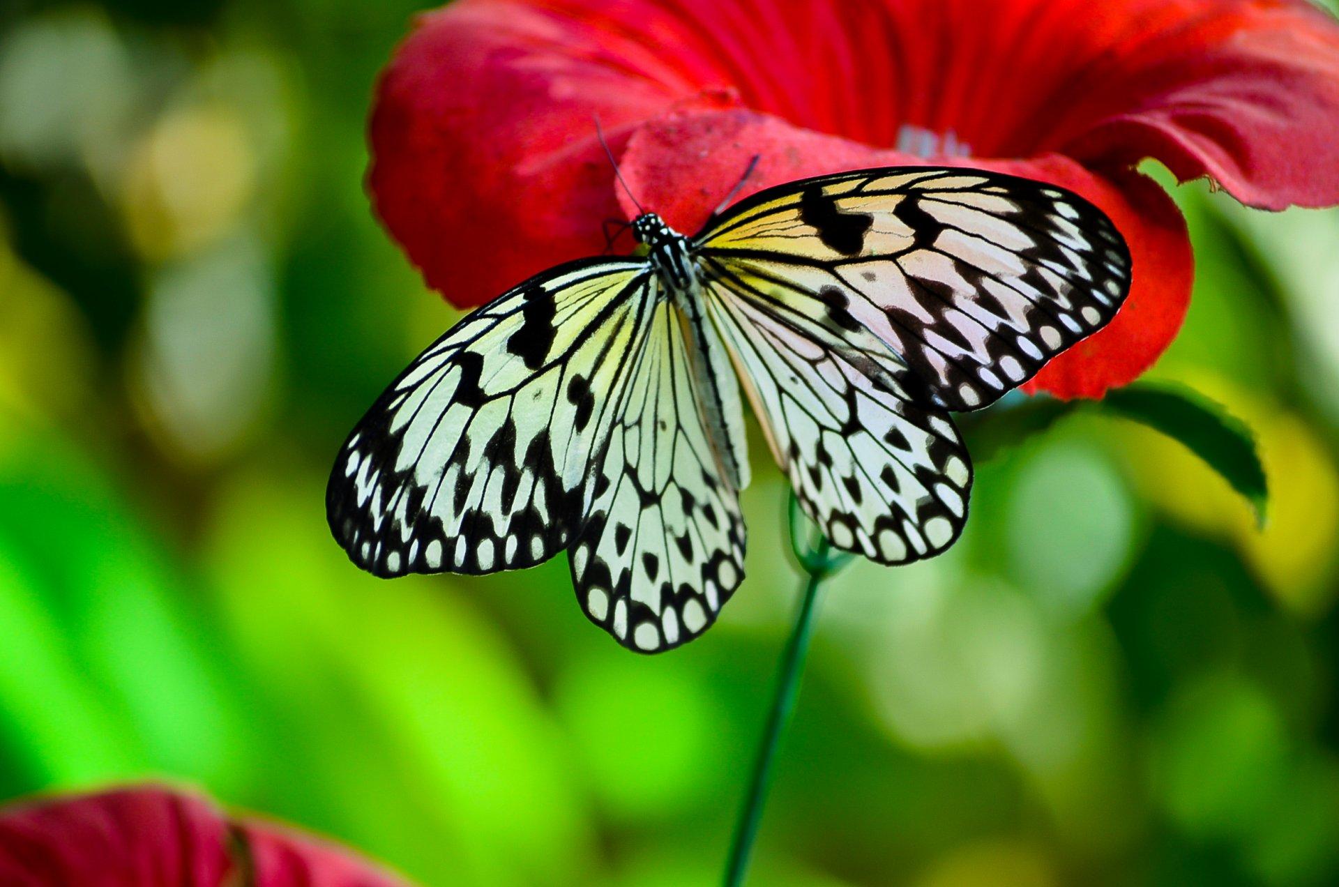 Обои мир бабочек, красота, цветок. Макро foto 13
