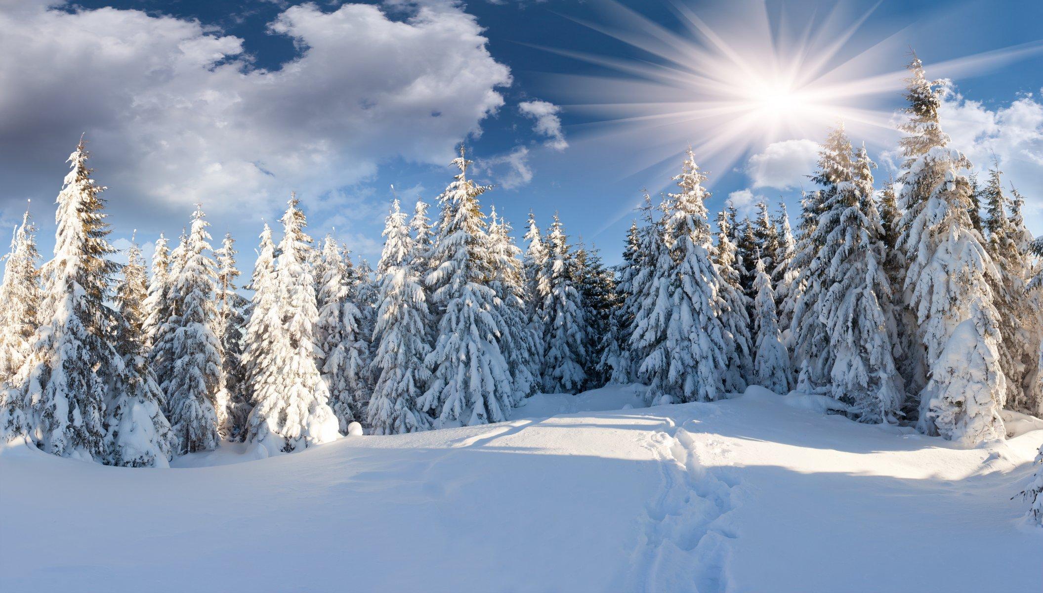 Зимние картинки с лесом