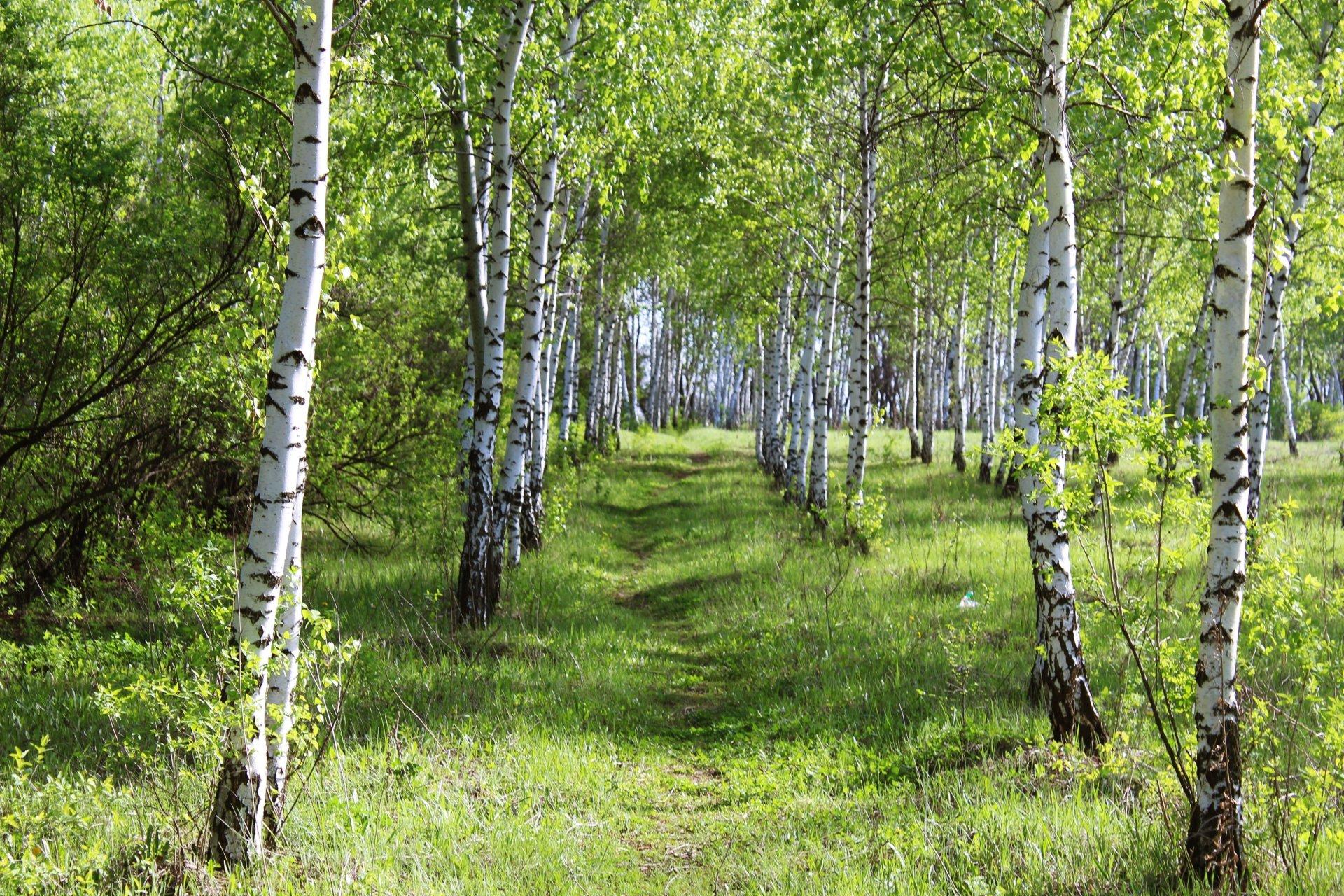 Фото, картинки русской природы красивые