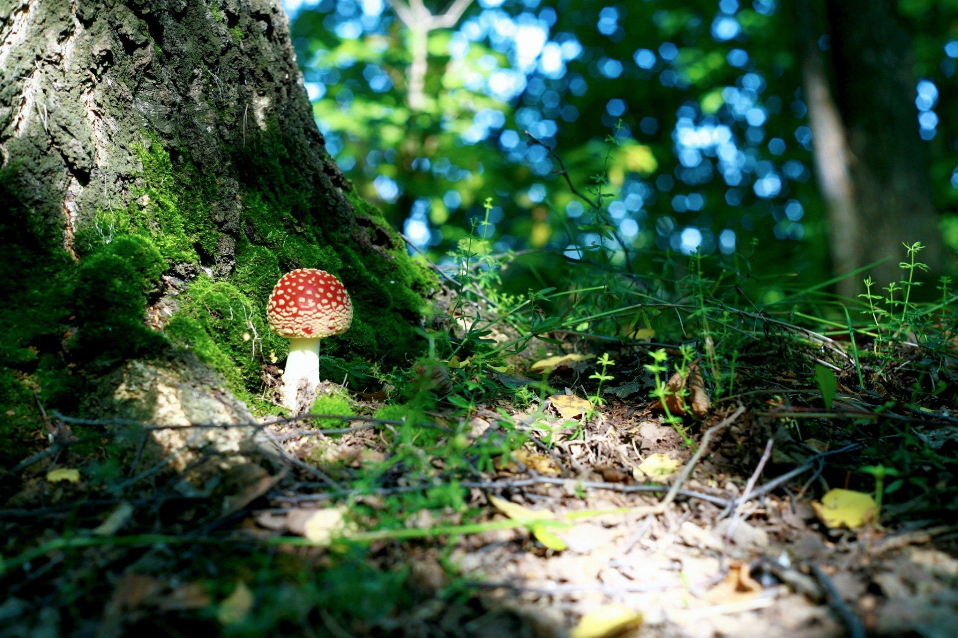 лес деревья грибы