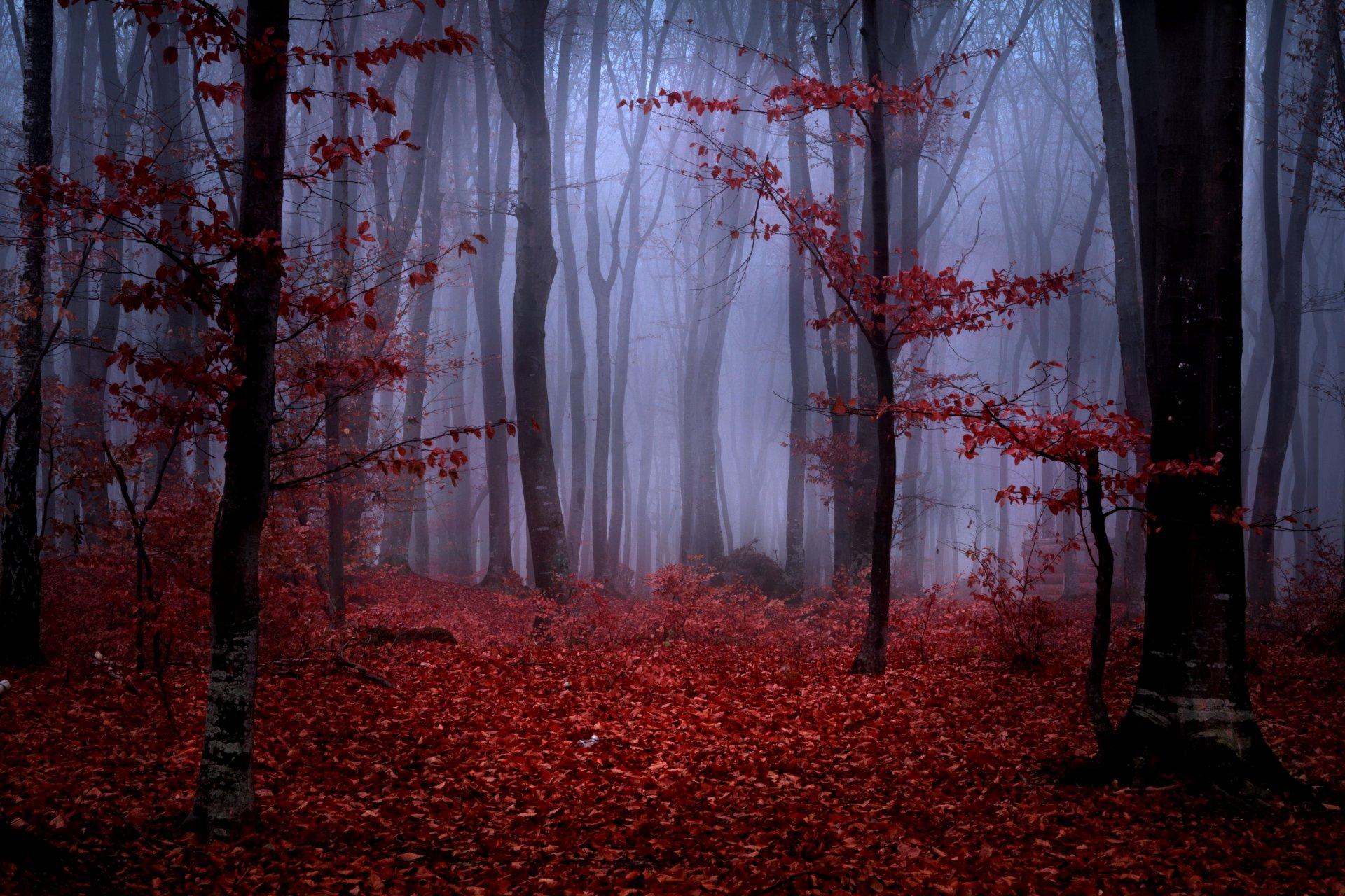 коротко фото красной осени позы