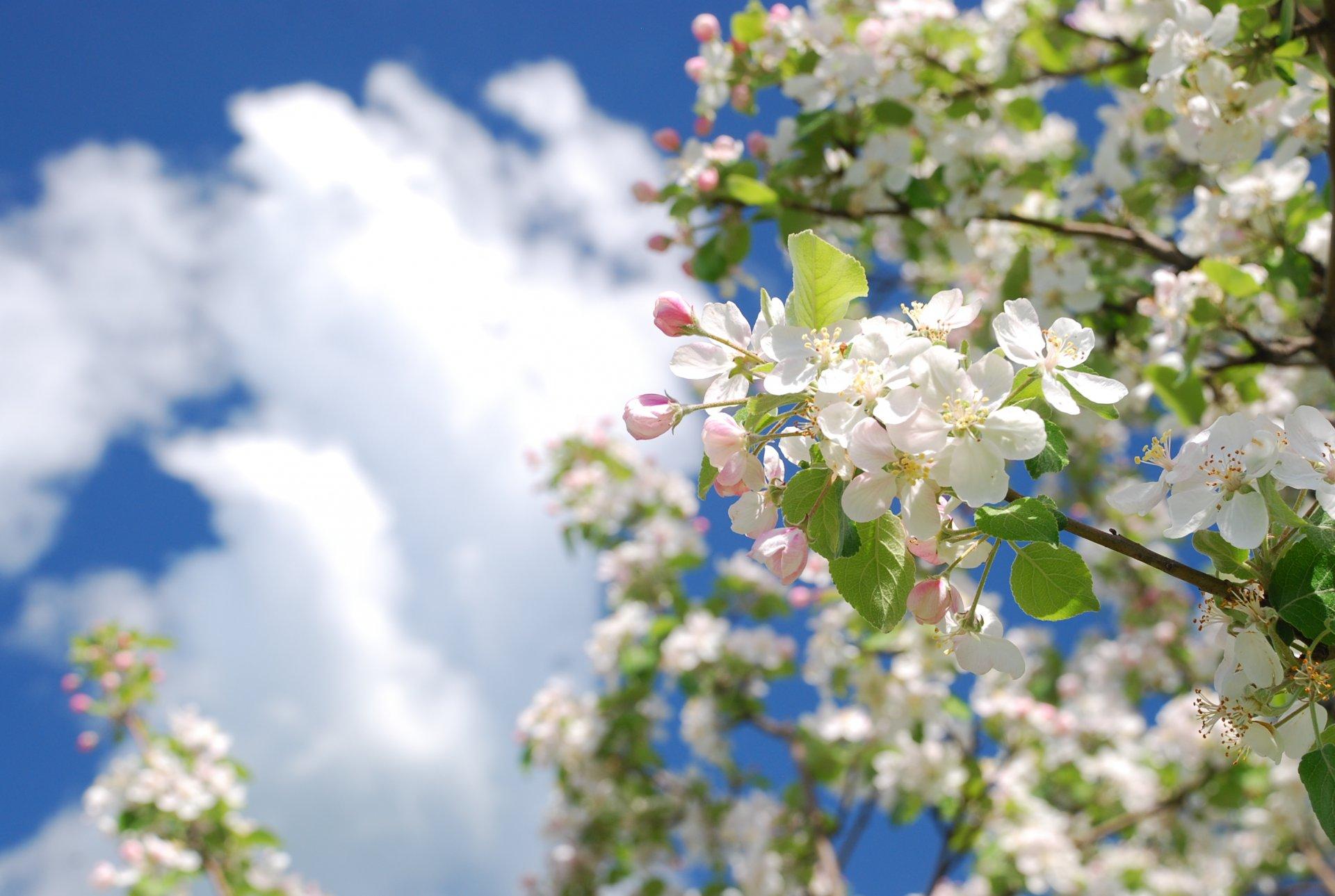 Картинки о природе весной