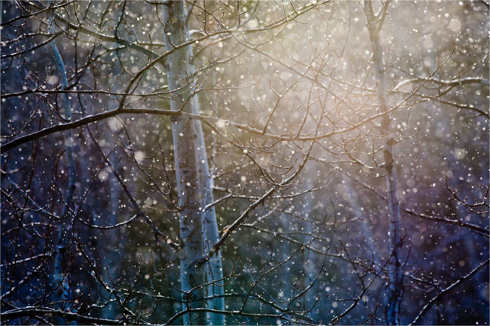 снег ветви лес snow branches forest  № 442893 без смс