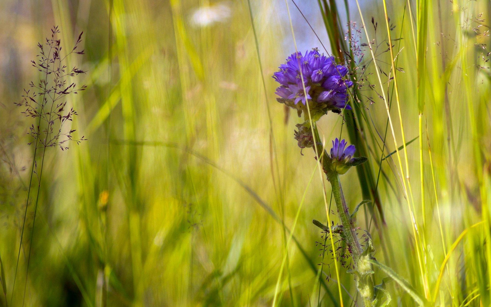 Полевые цветы травы купить минск, москве