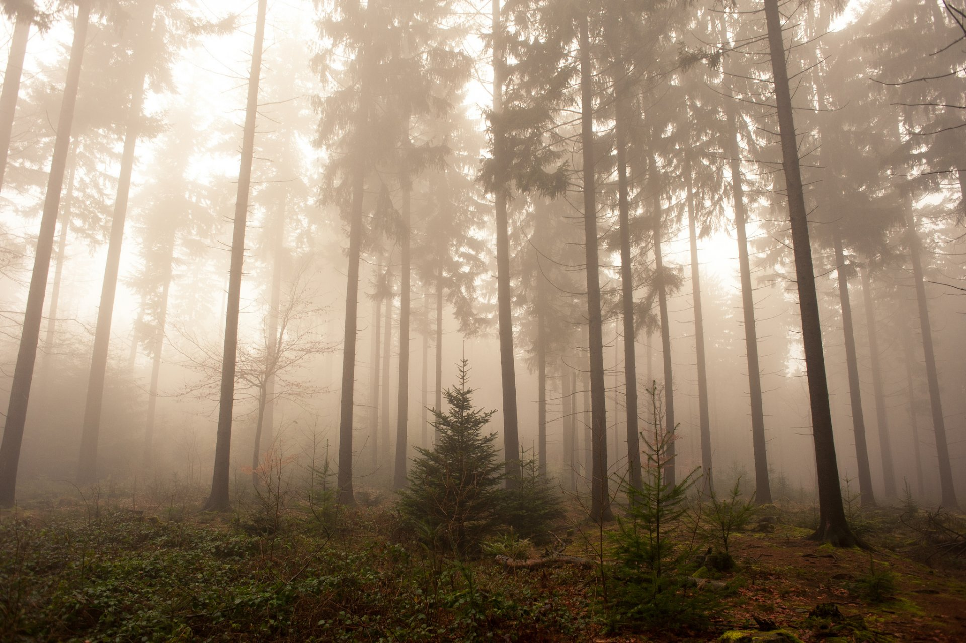 туманный лес рисунок отделка штукатуркой