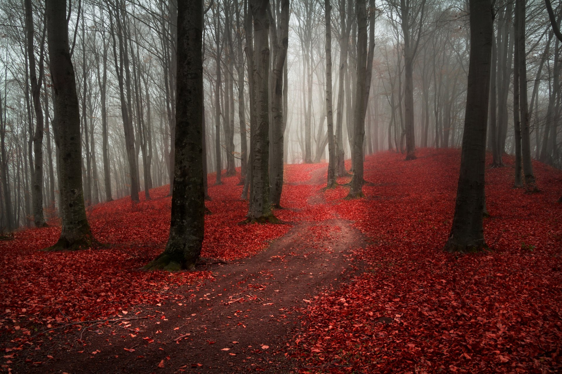 Осень красная деревья туман скачать
